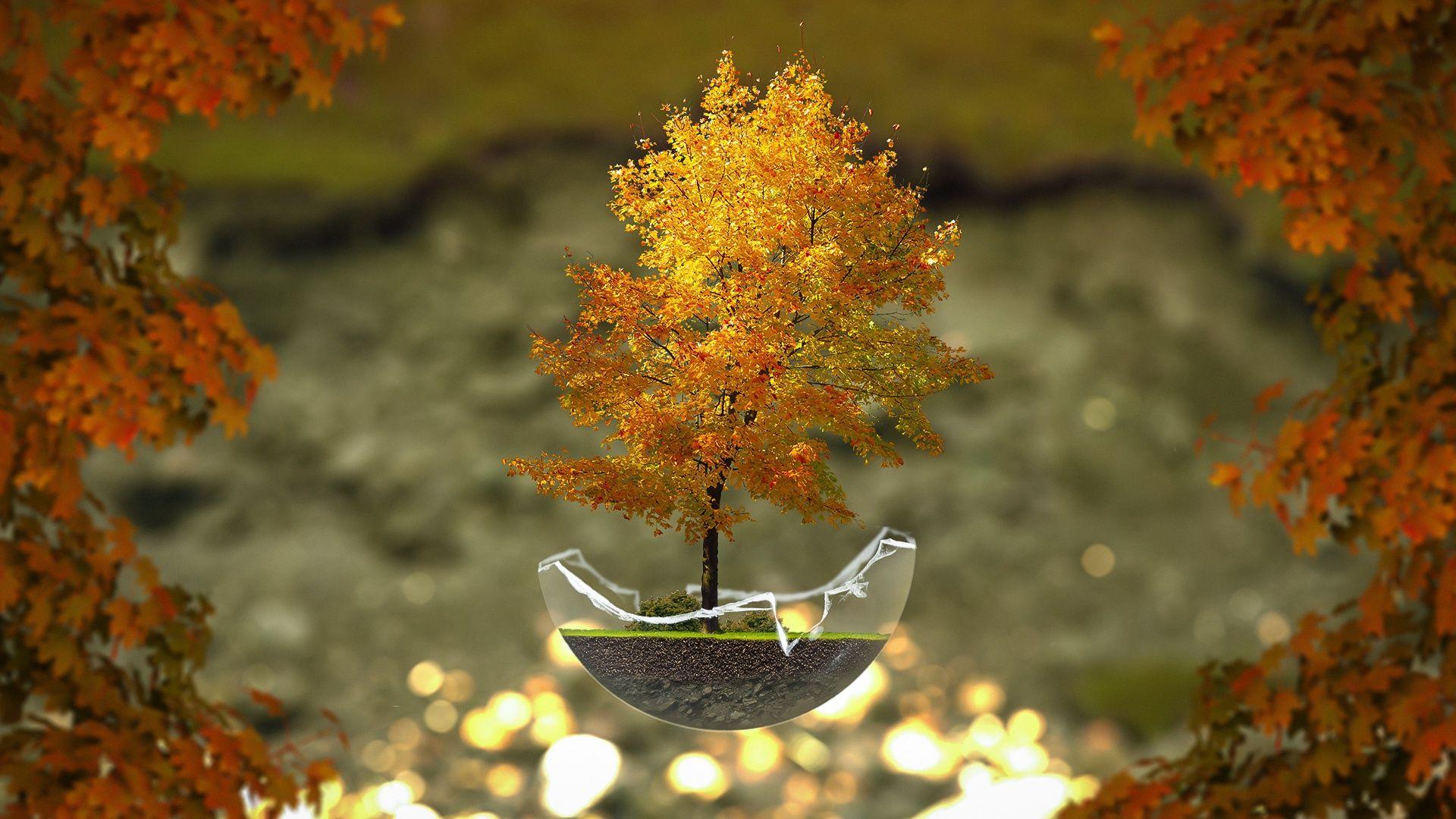 The Desktop Wallpaper Autumn, Tree, Bonsai
