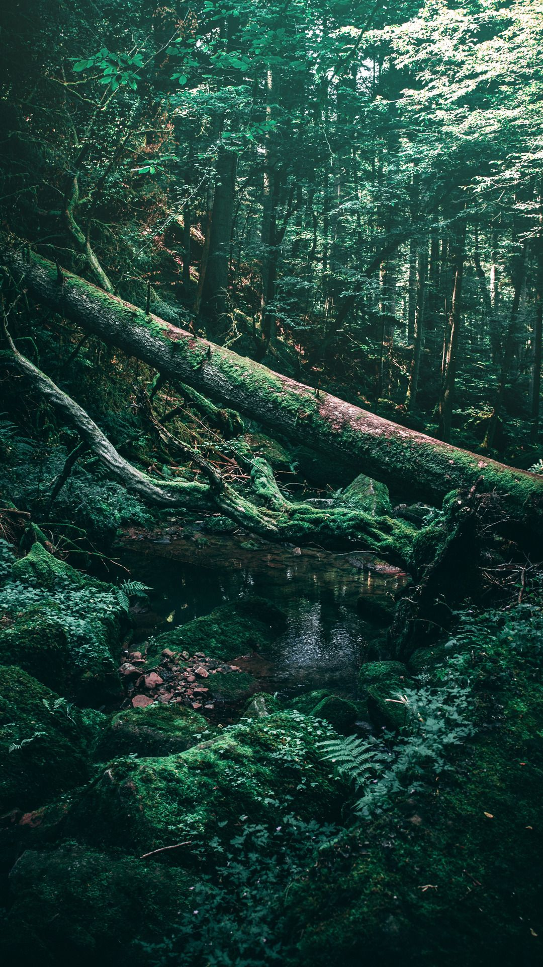 Tree, Forest, Oldgrowth Forest, Nature, Green, Vegetation