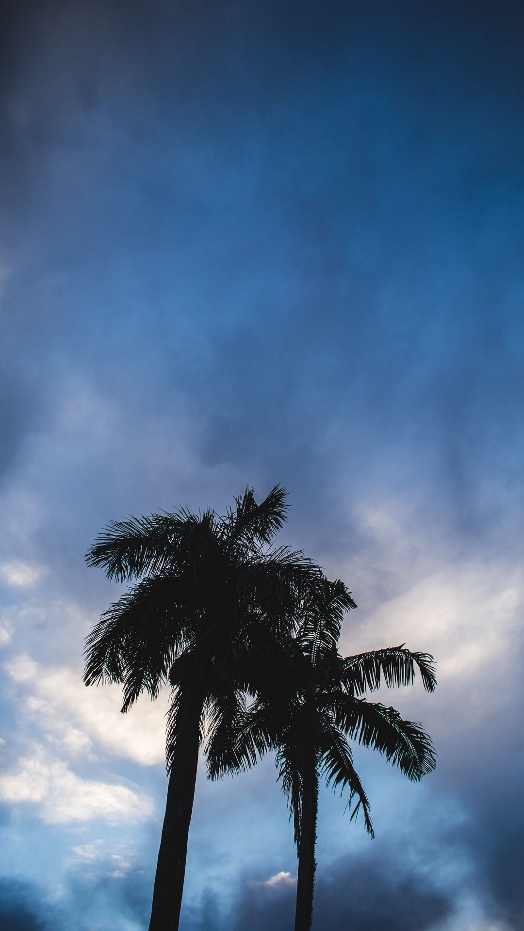 Wallpaper Palm Trees, Dark, Silhouettes, Sky, Clouds