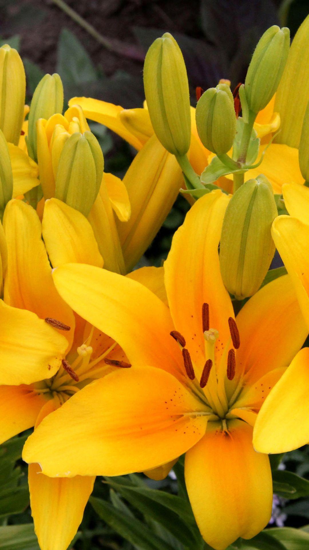 Yellow Lilies Wallpaper For Nokia Lumia