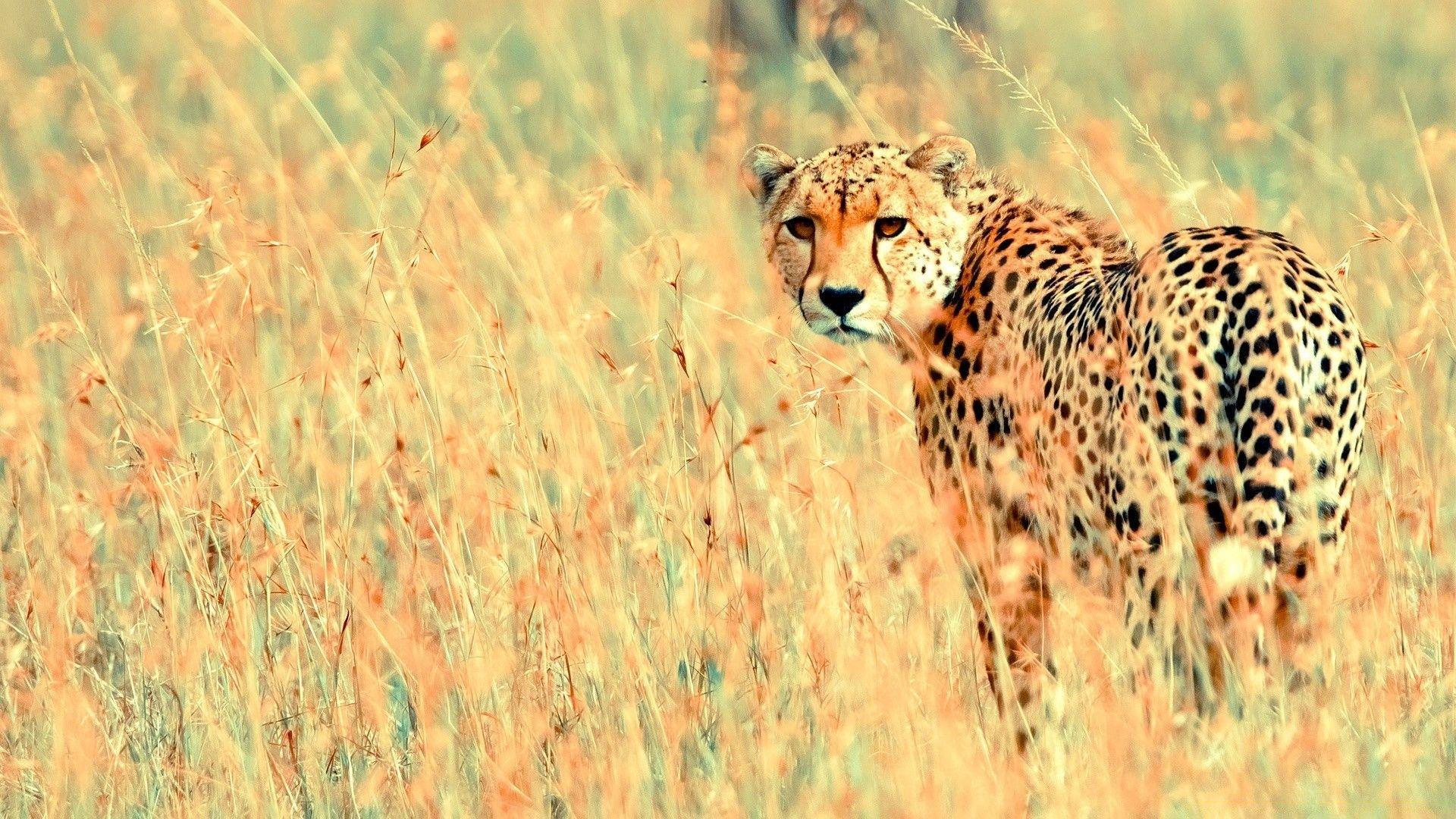 Animals, Wildlife, Mammal, Nature, Grass, Animal, Wild