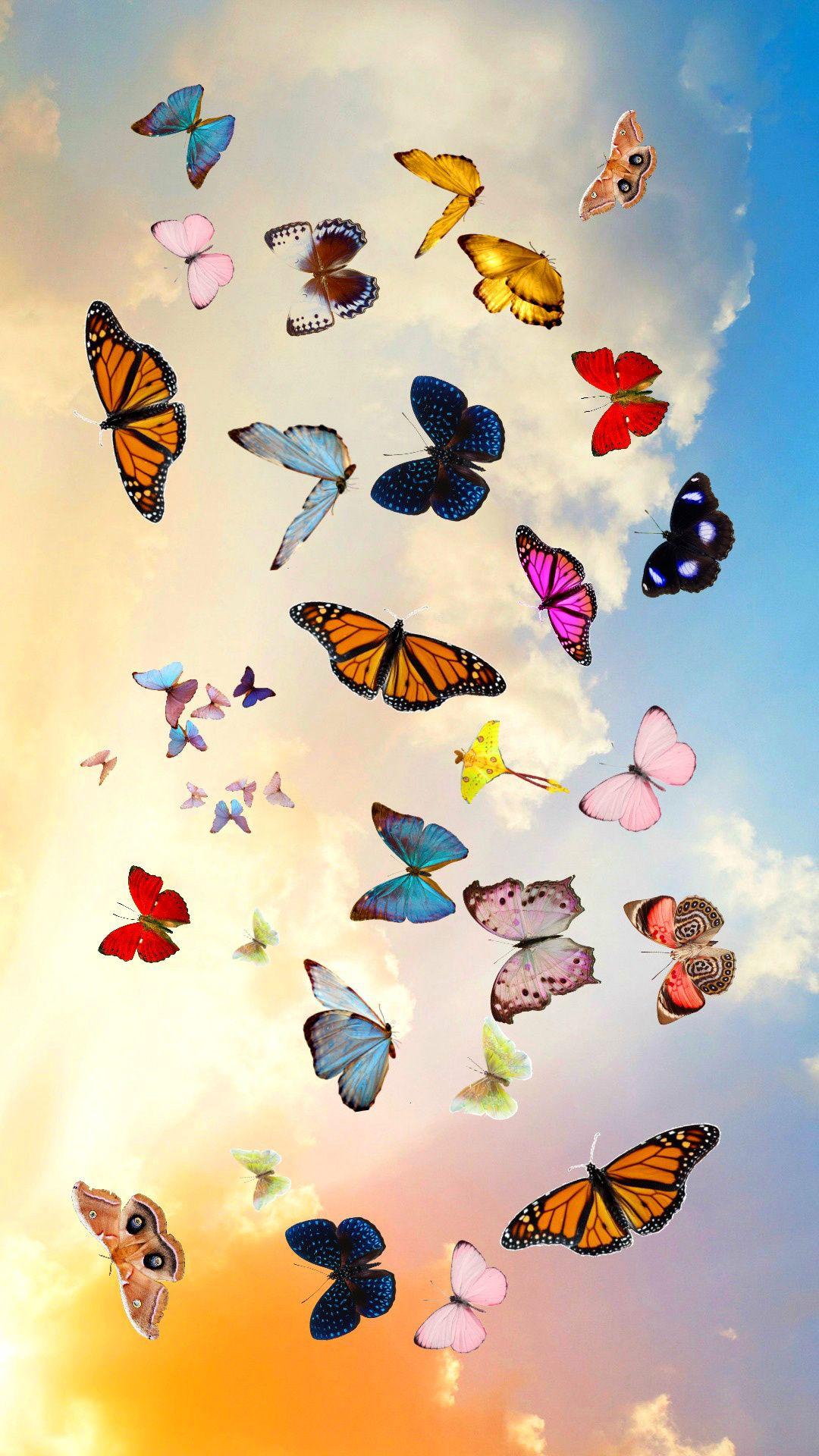 Butterflys Photography