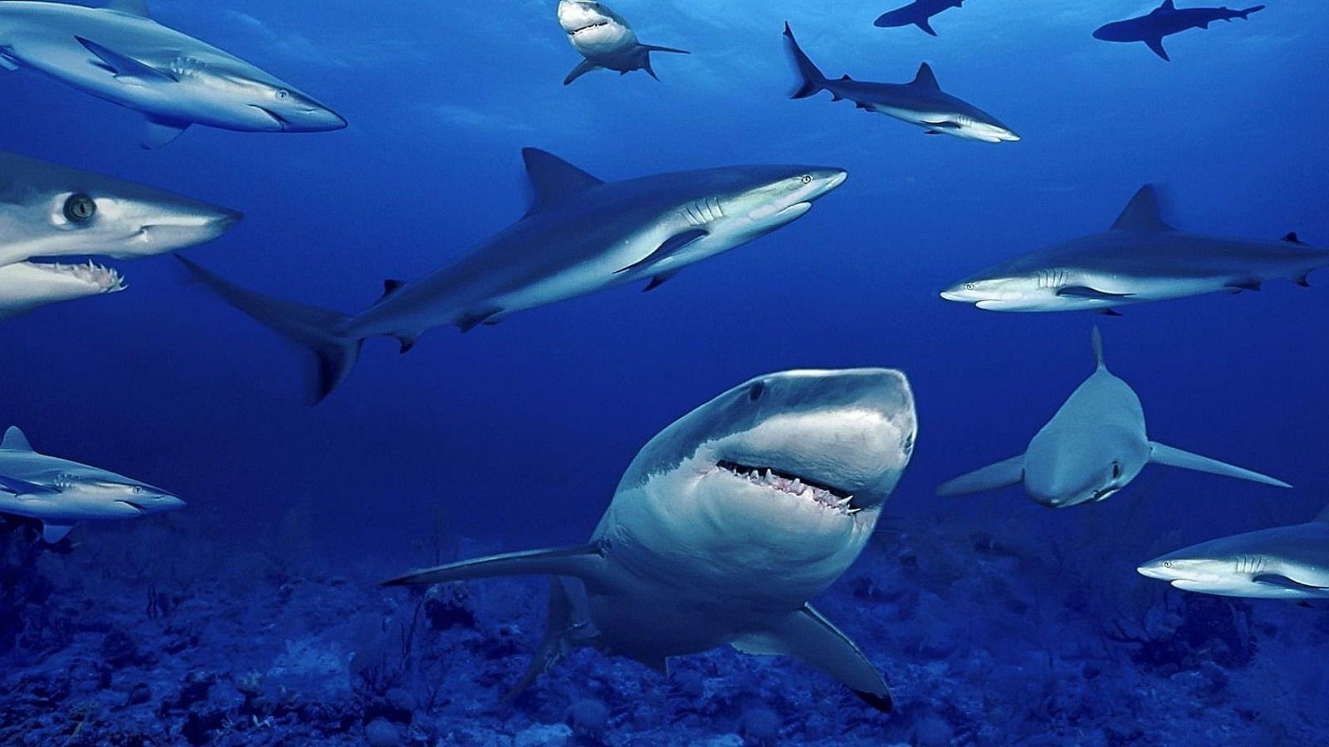 A Pack Of Sharks
