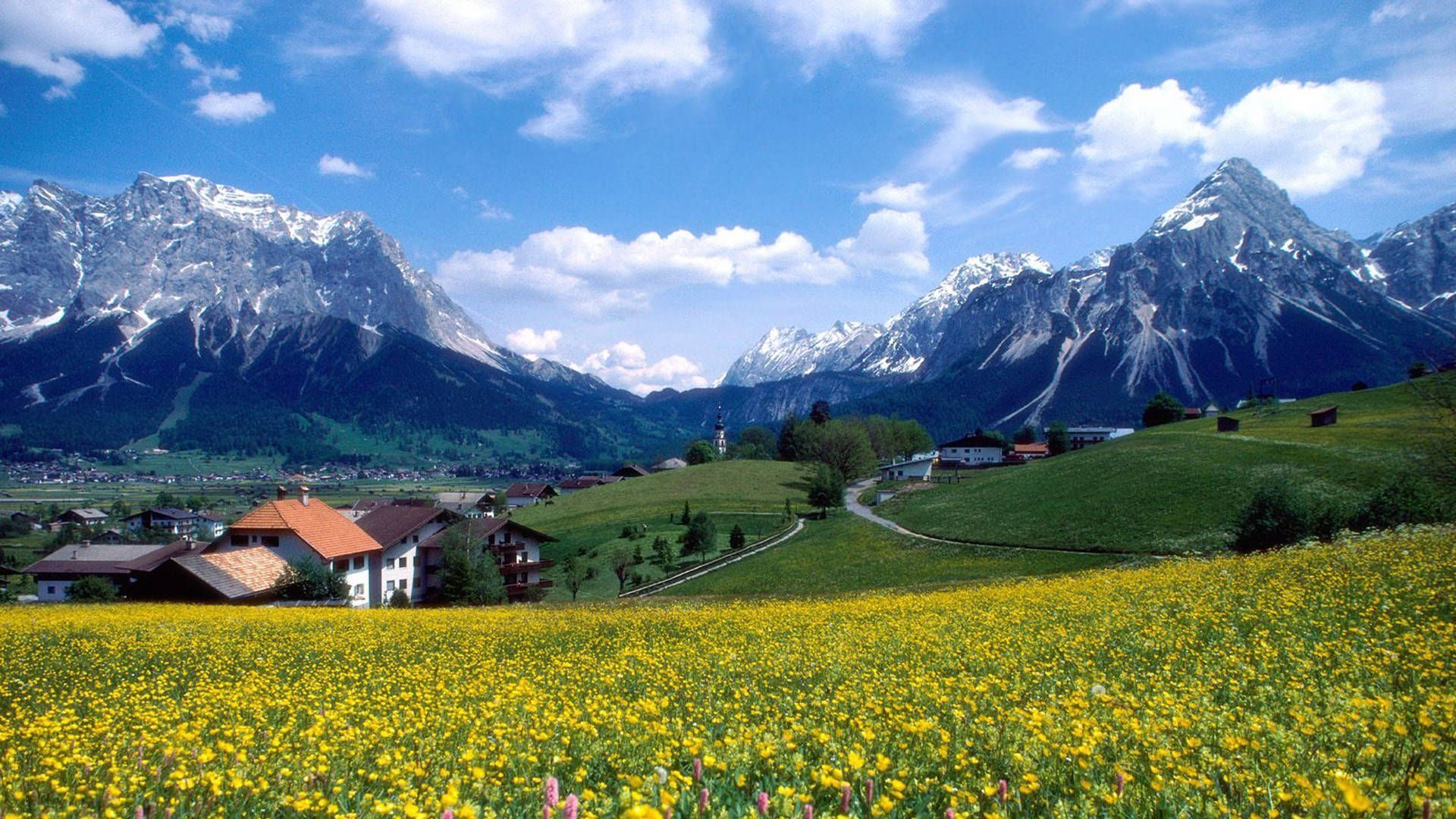 Alpine Meadows Of Switzerland