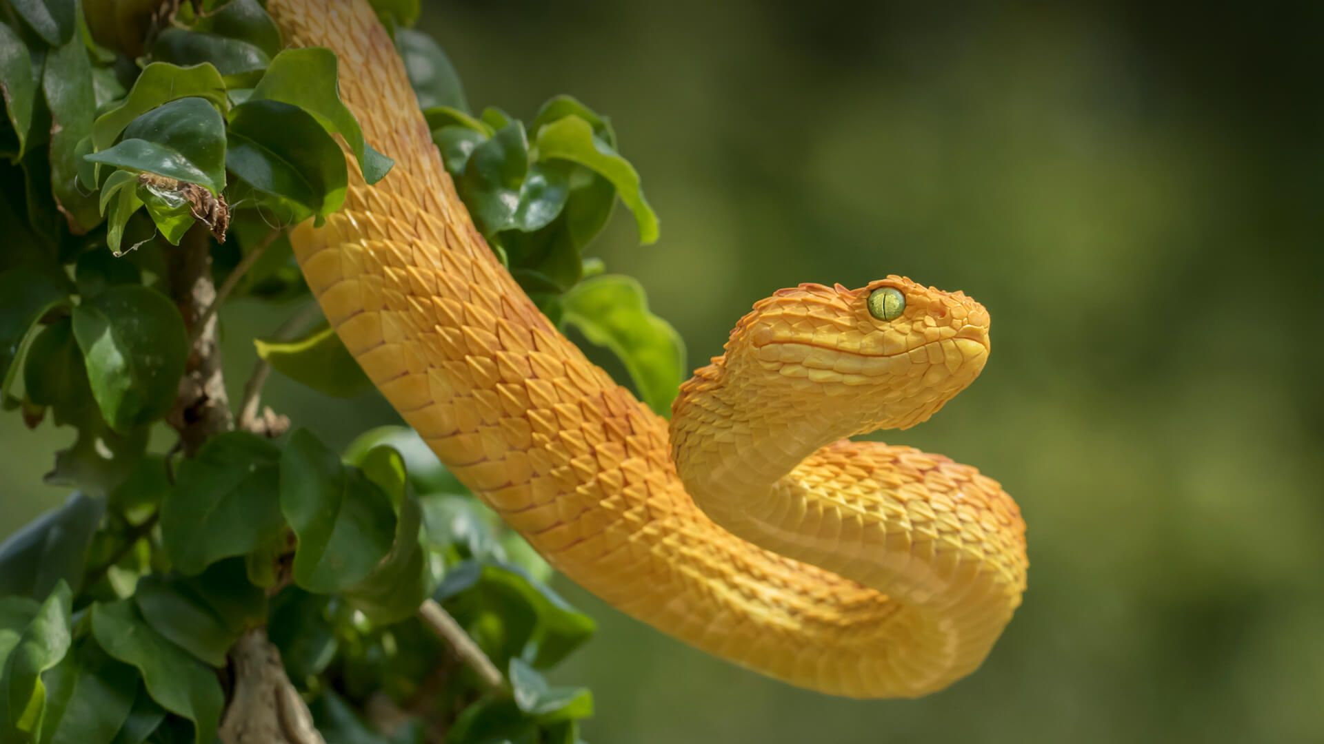 Ataris The Form Of A Snake