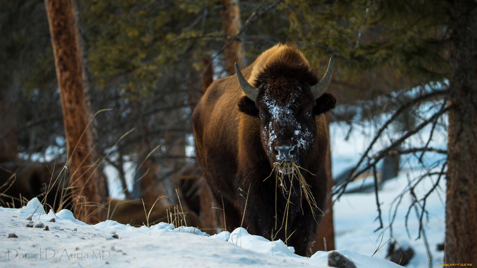 Belarus Bison Reserve In Winter