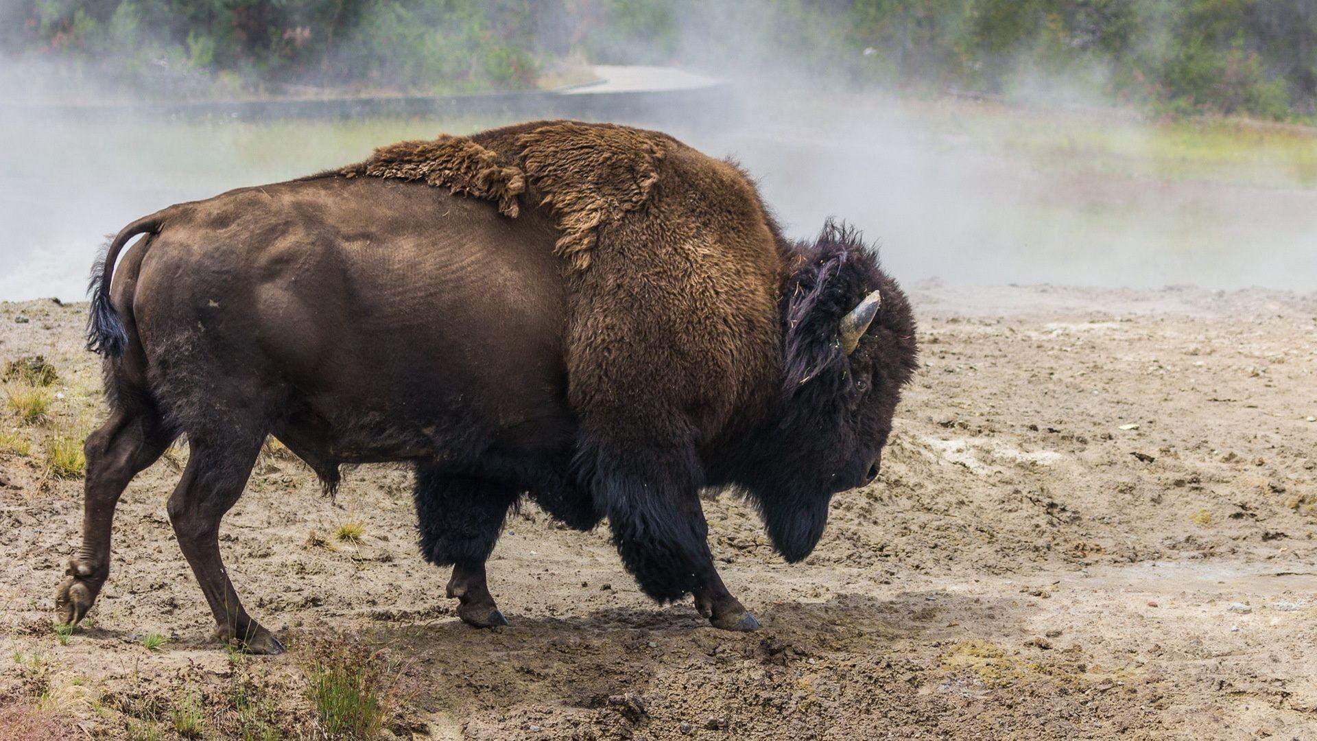 Buffalo Big Picture