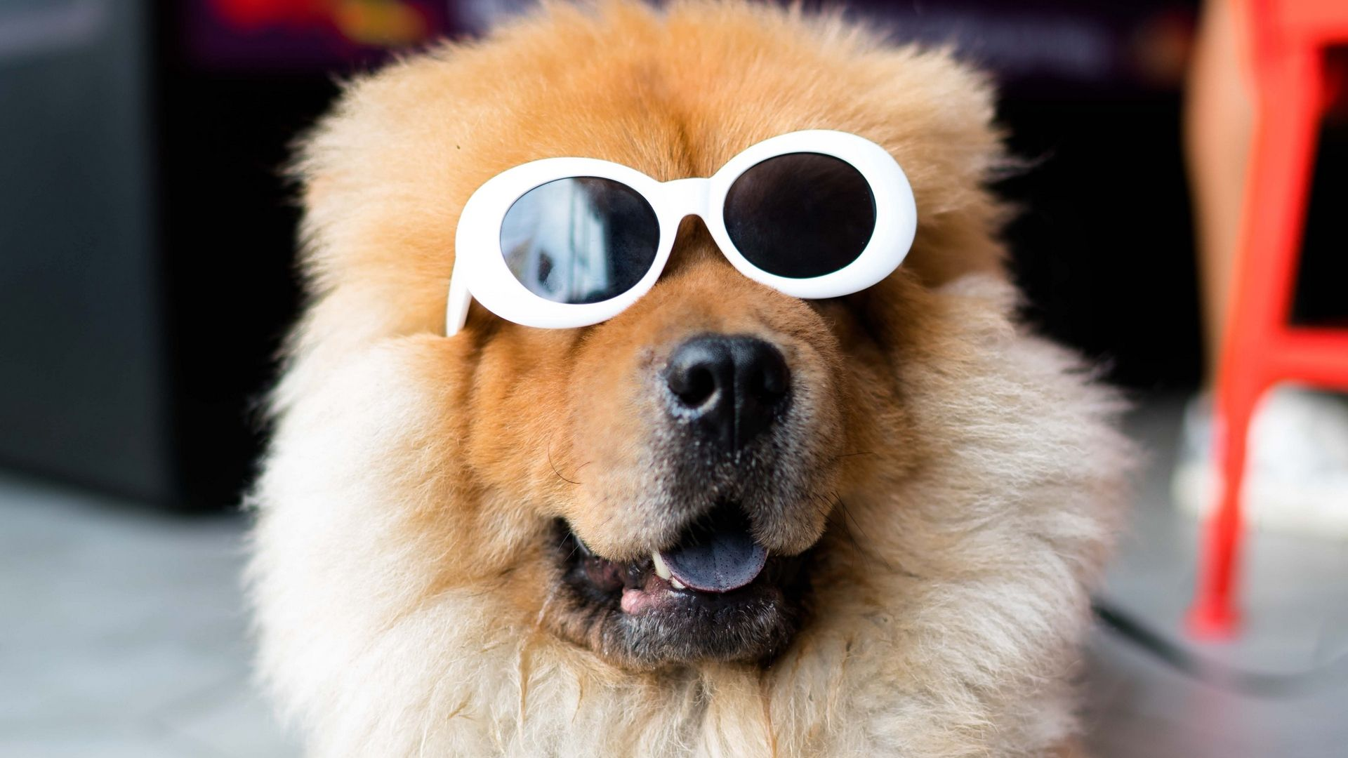 Chow With Glasses