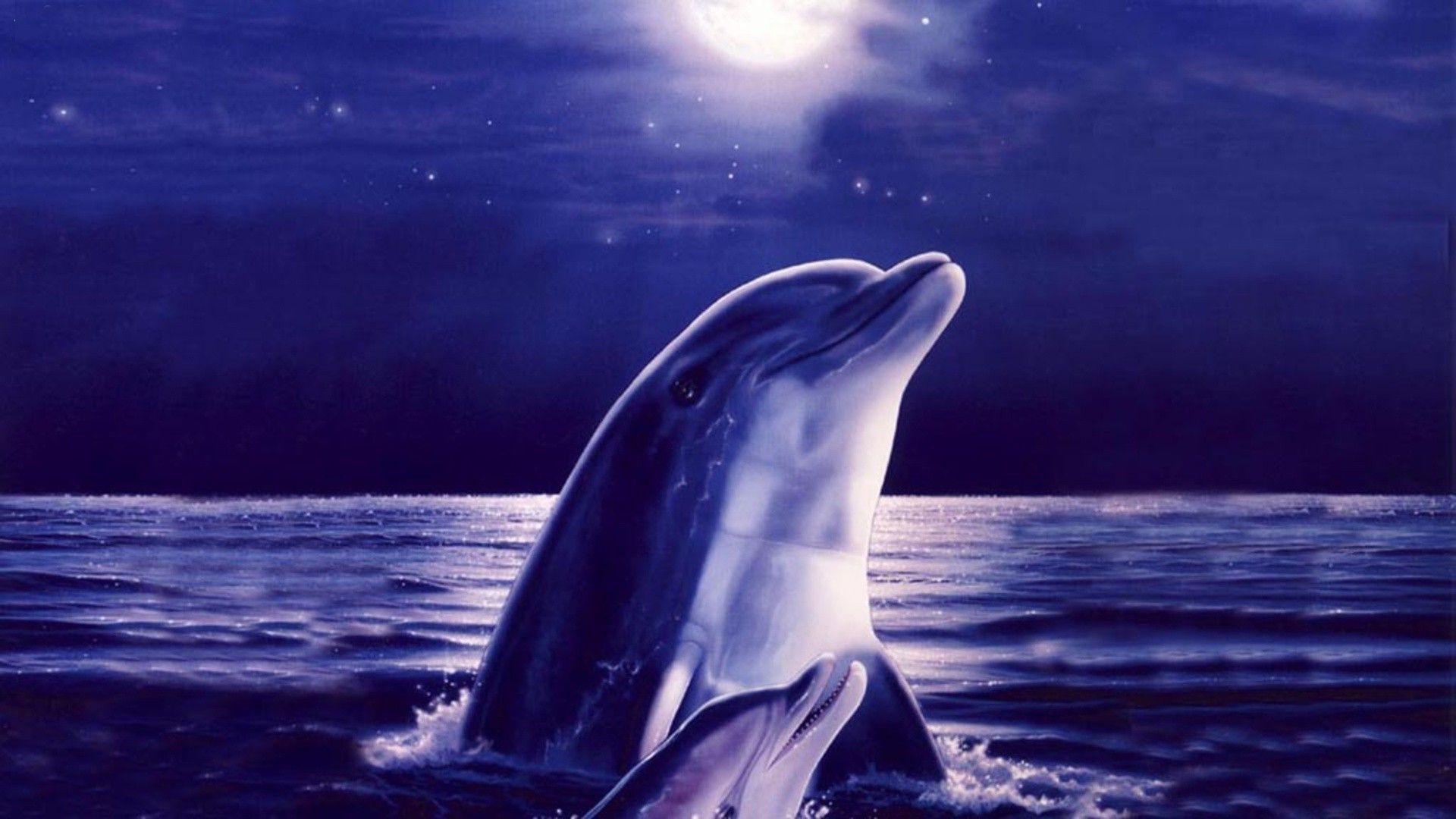 Dolphin Night