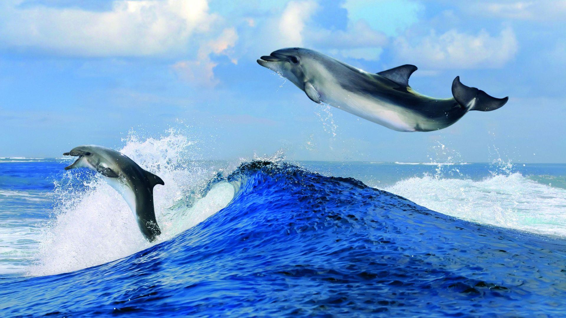 Dolphin On Wave Photos
