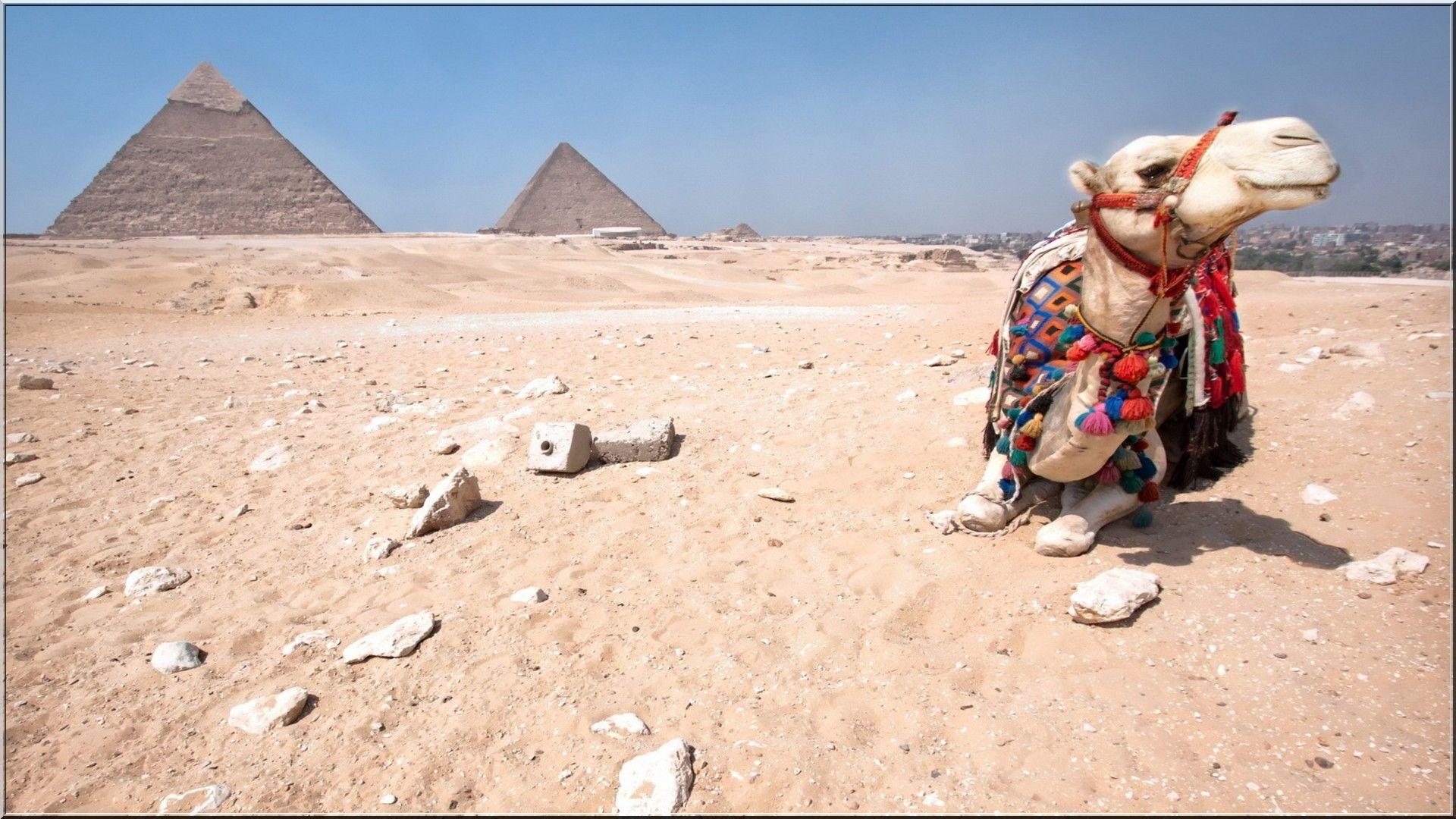 Egypt Pyramids Camels