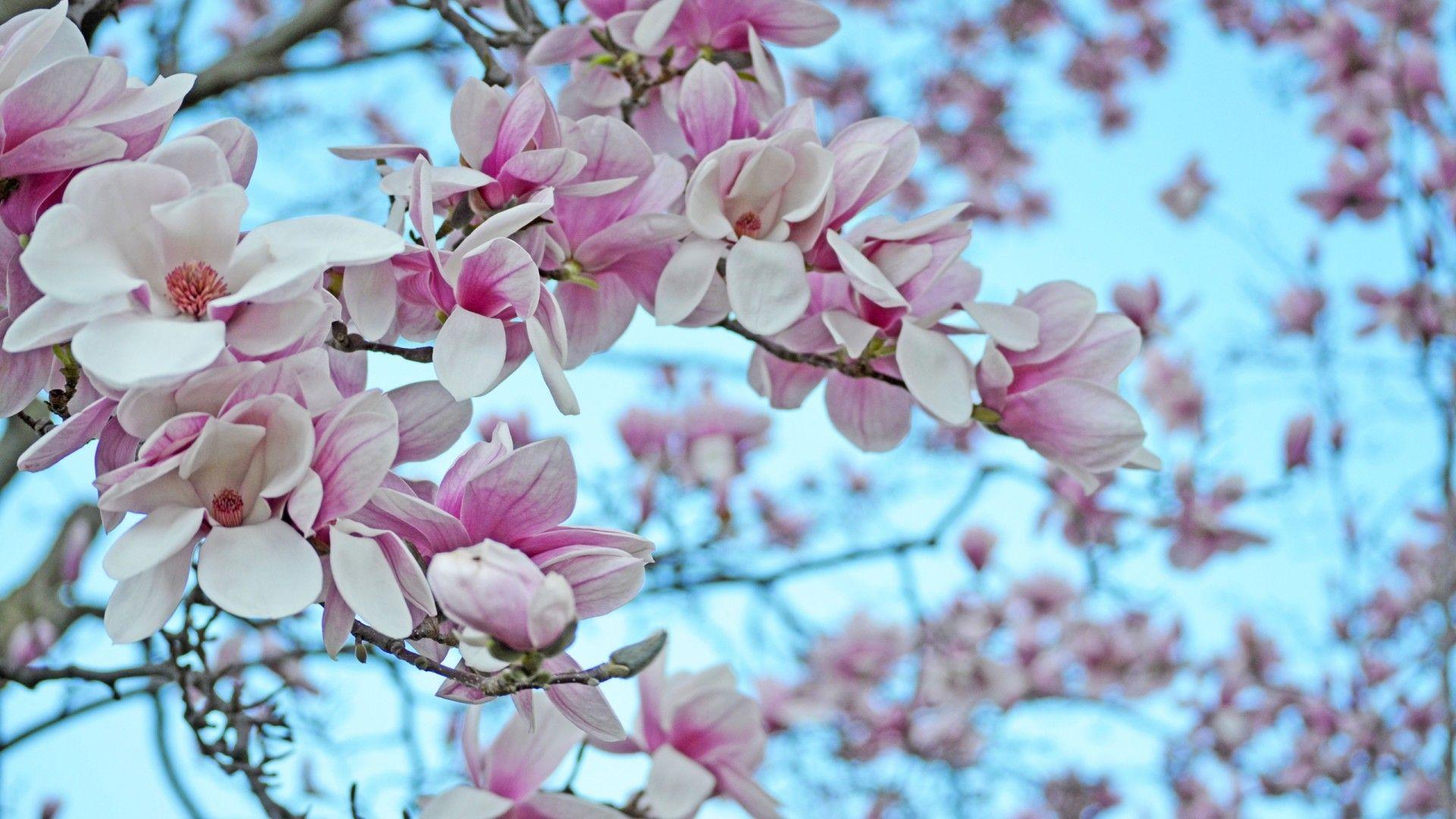 Flatley Magnolia