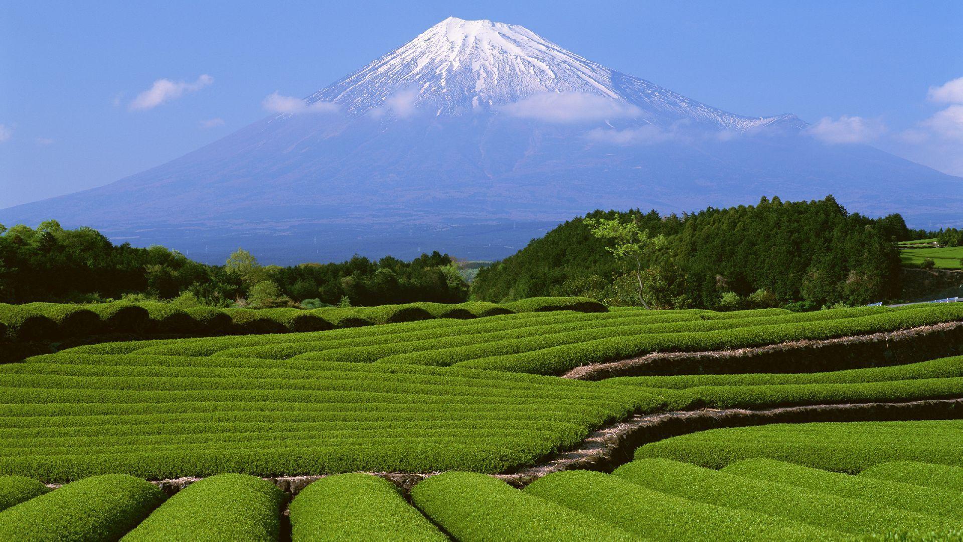 Fuji Wallpaper