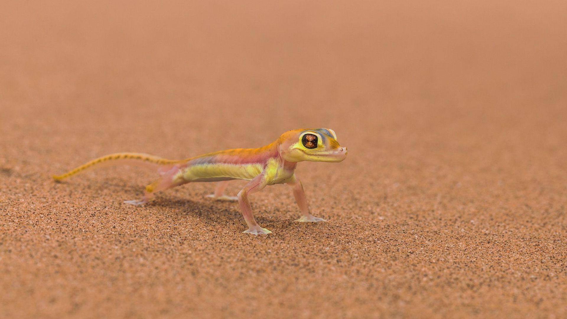 Gecko Desert
