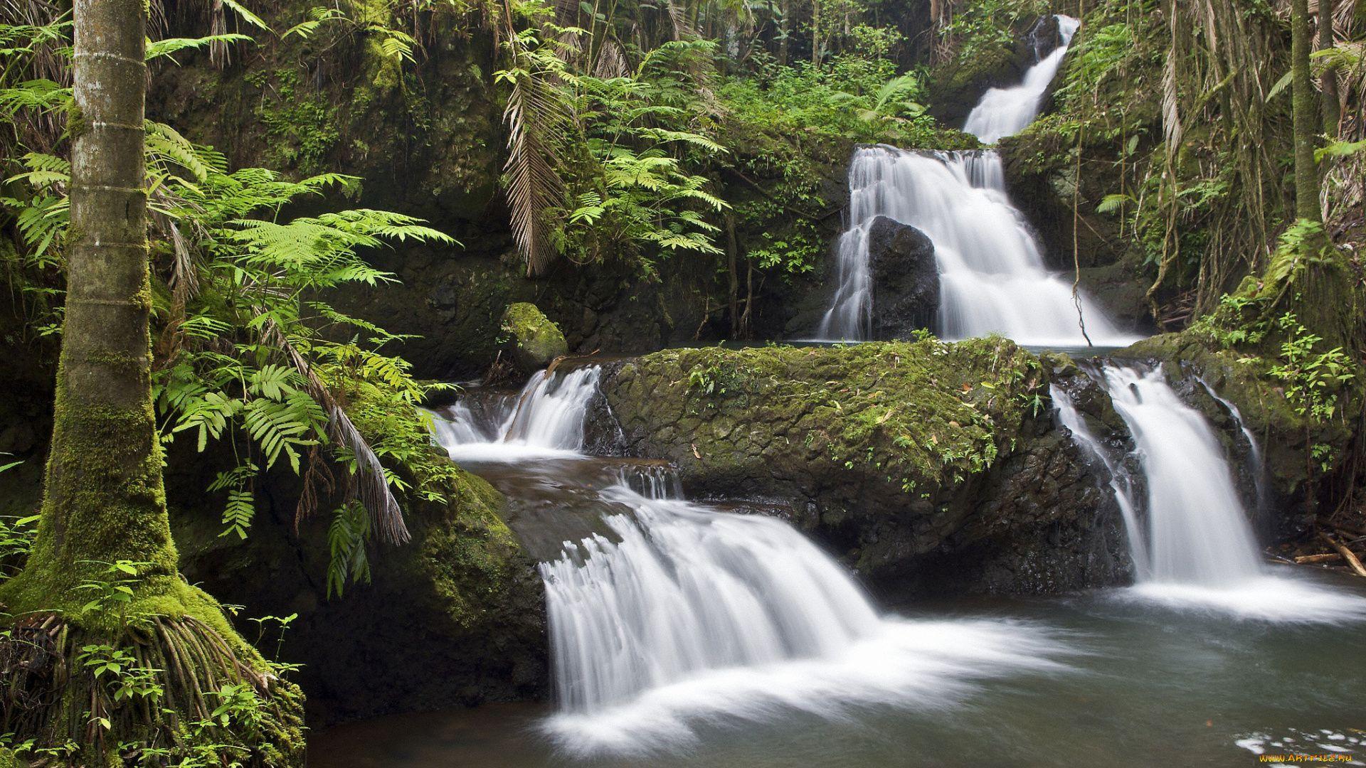 Hawaii Forest Waterfall