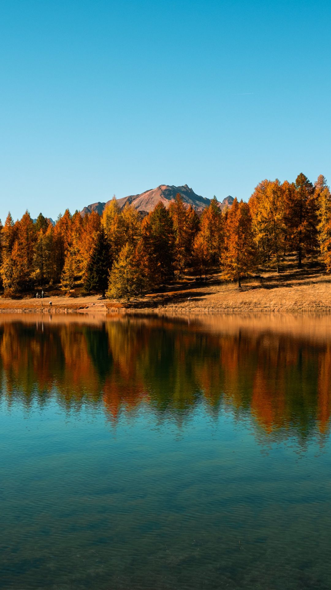 Autumn Forest And Lake Iphone Wallpapers 20 Images Wallpaperboat