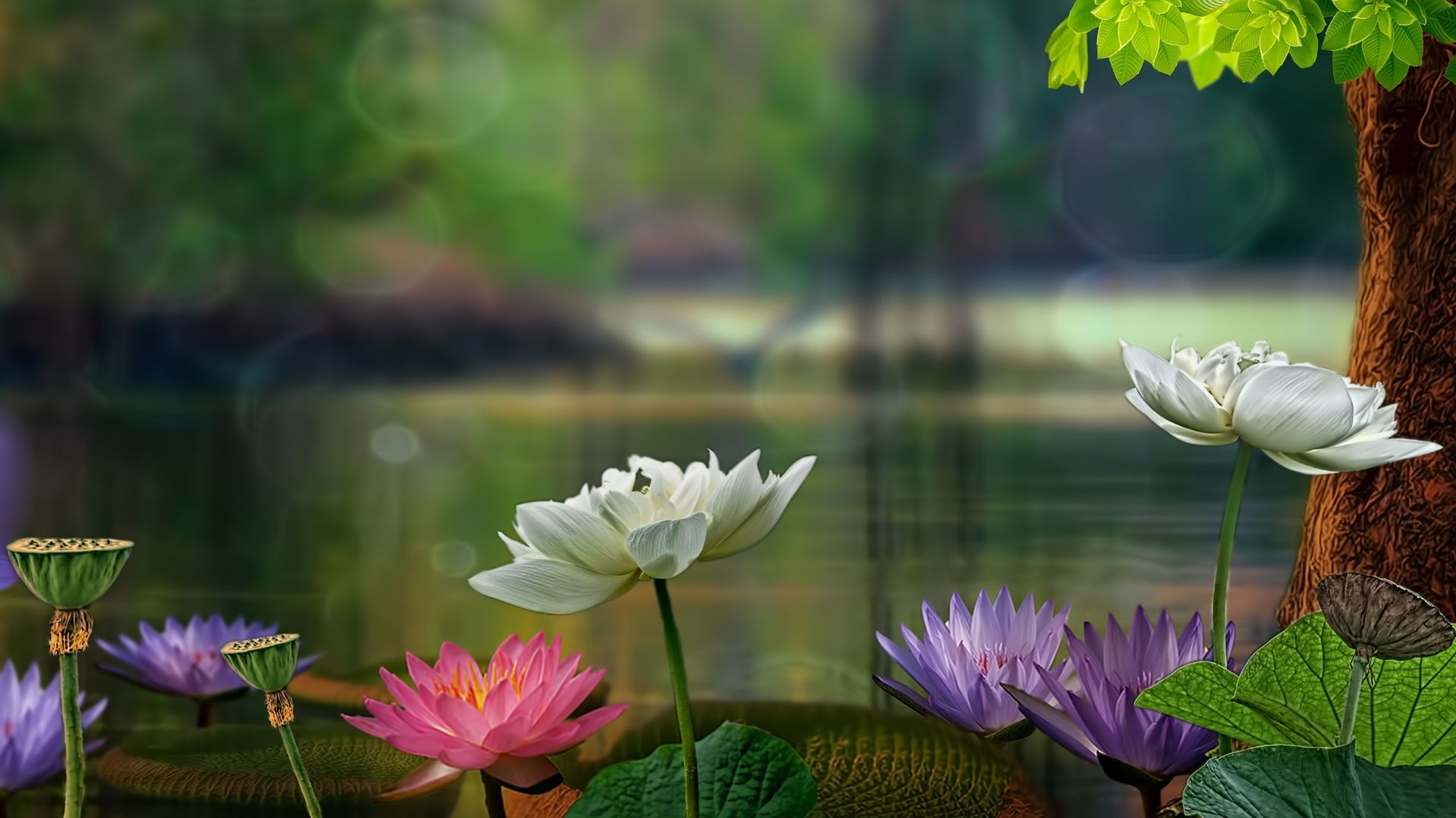 Lotus In Nature