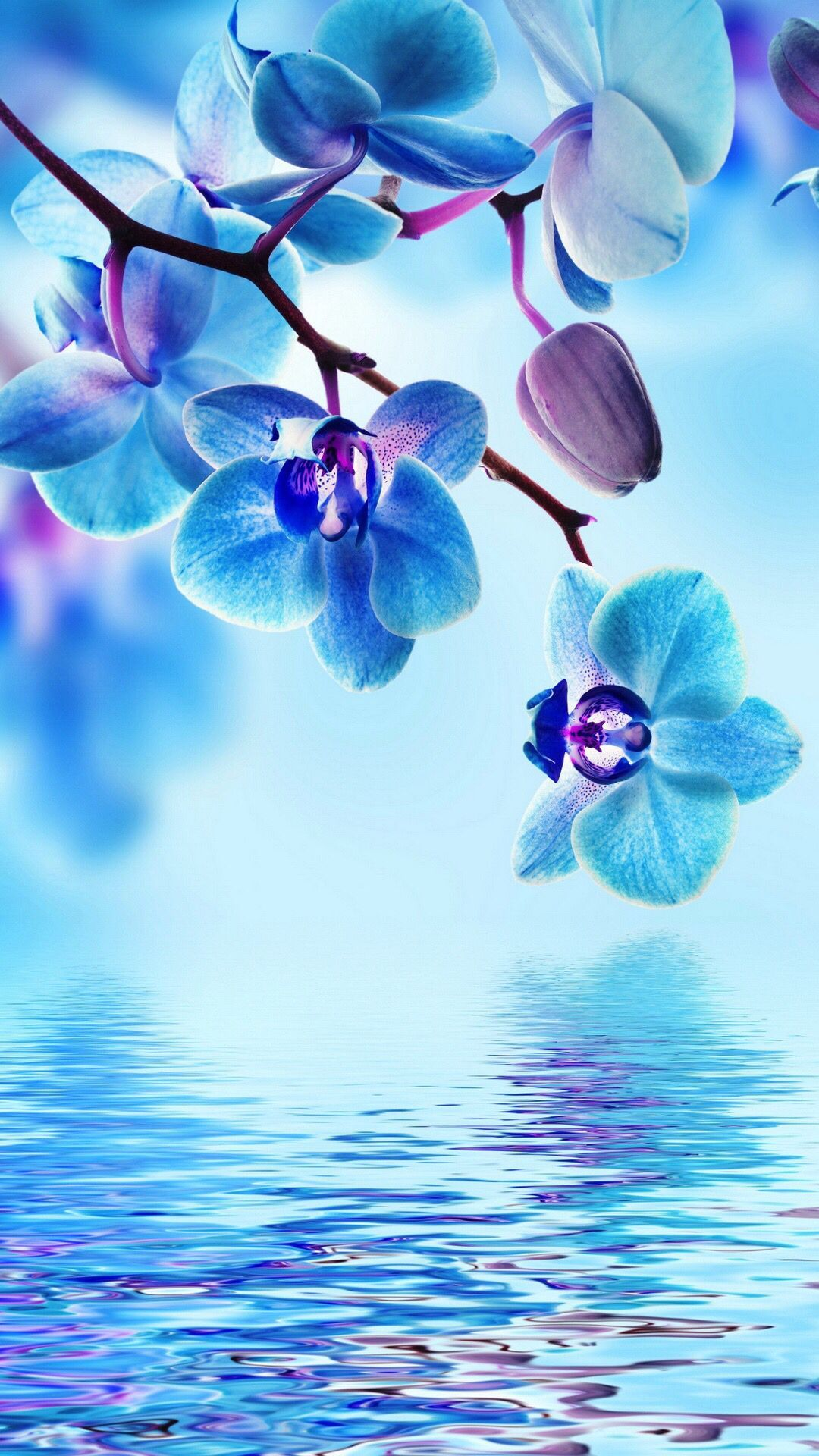 Orchid Blue Background