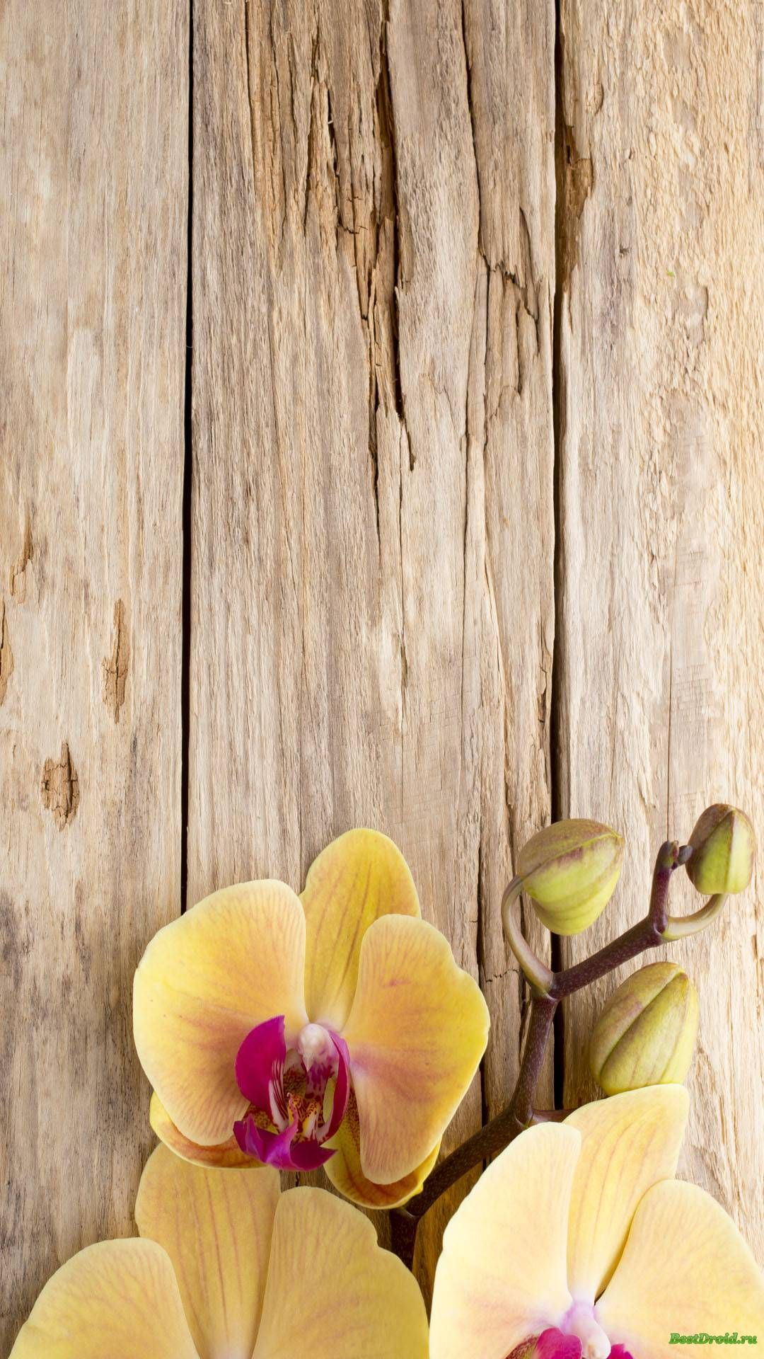 Orchid On Wooden Background