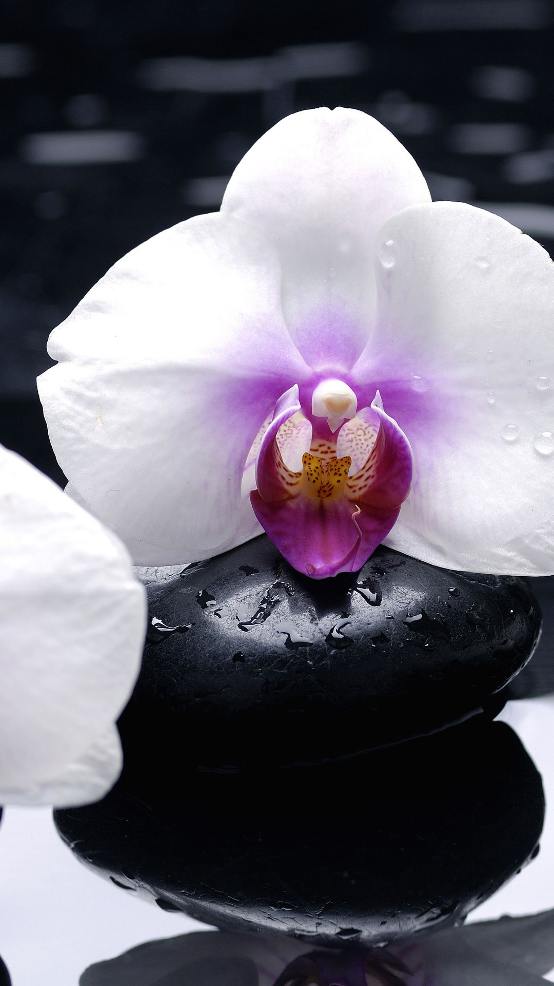 Orchid Pictures 2