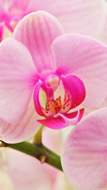 Orchid Pictures