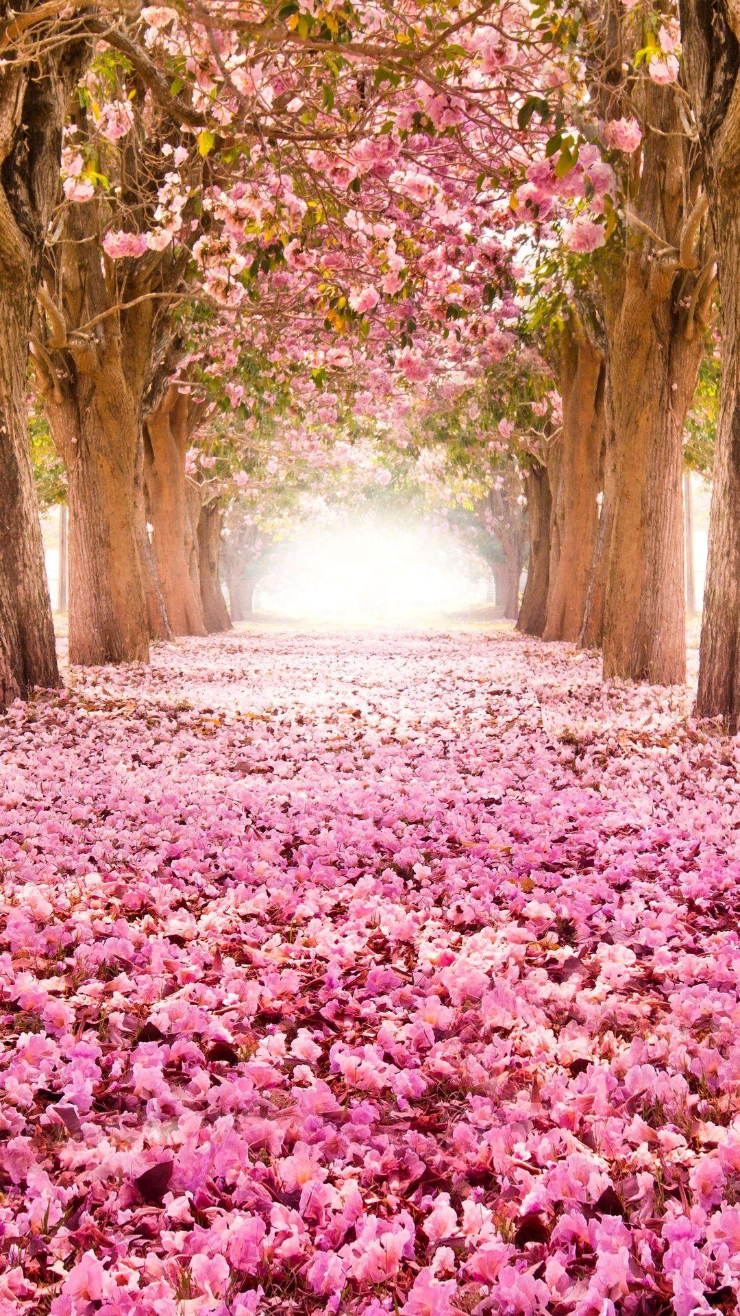 Sakura Vertical Picture