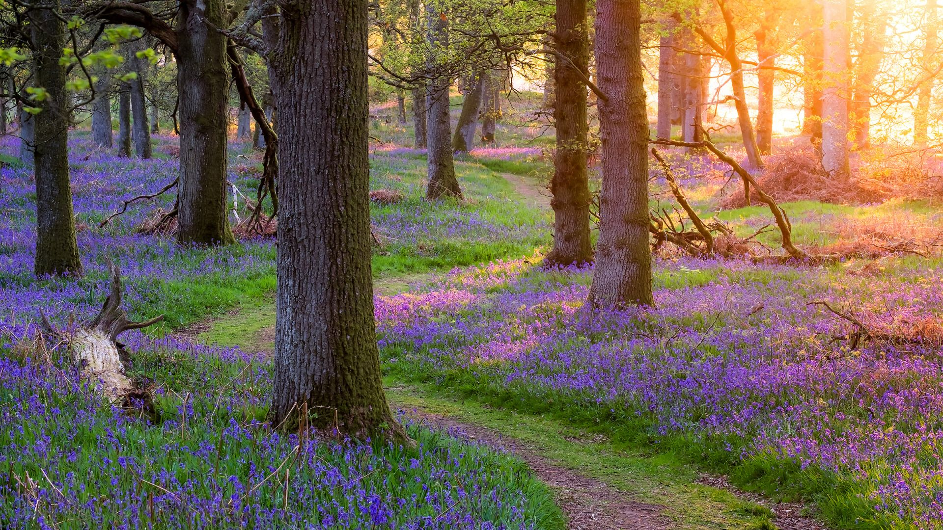 South Nature Flowers Forest Photo