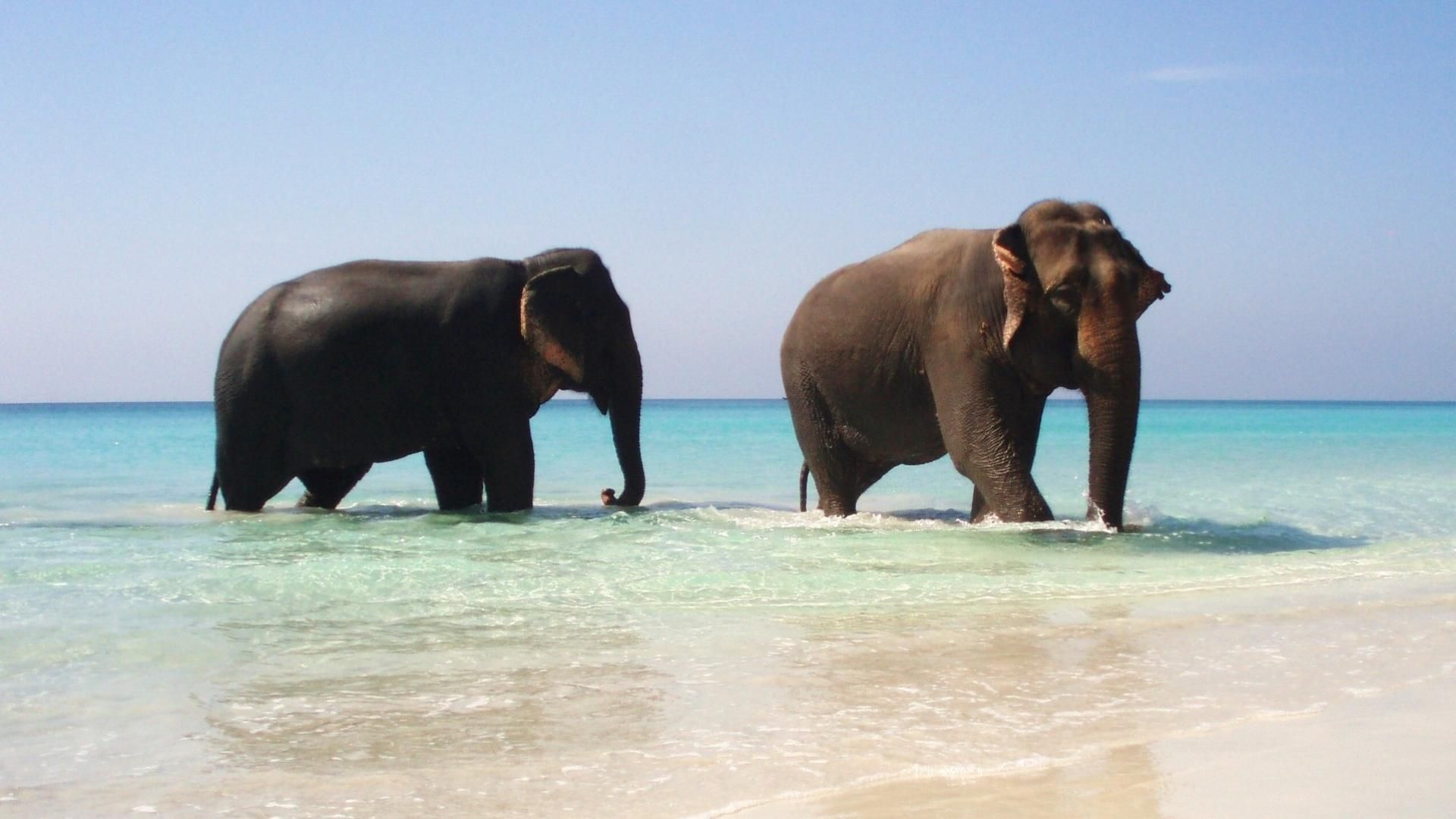 Sri Lanka Sea Elephant