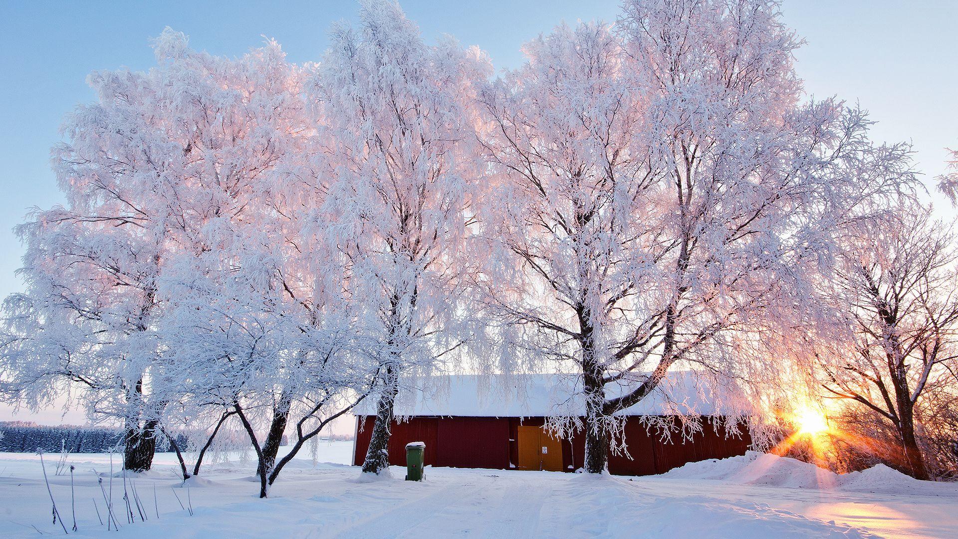 Sunny Winter Day Photo