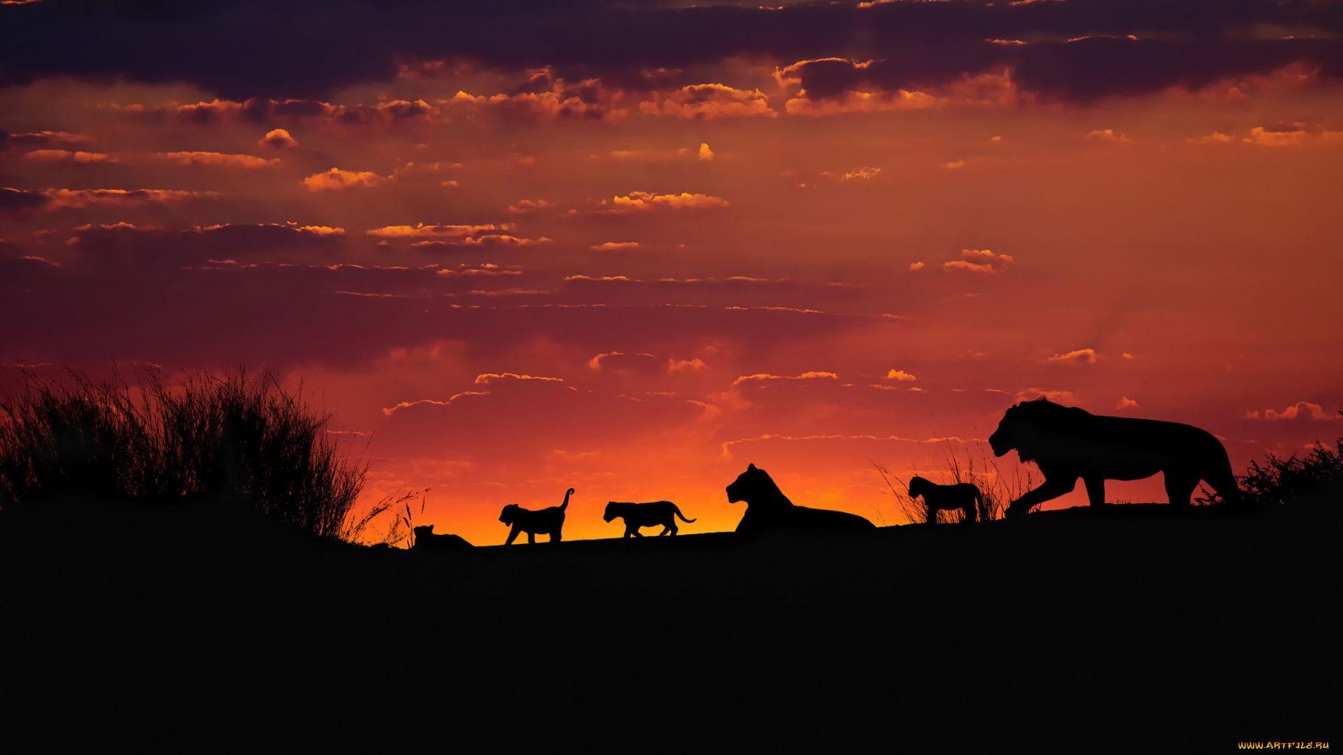 Tanzania Safari Sunset