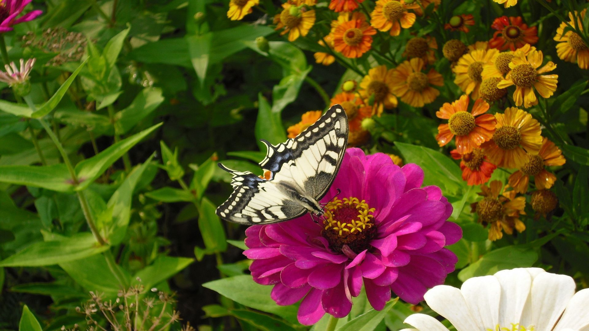 Wallpaper Butterfly On Flower