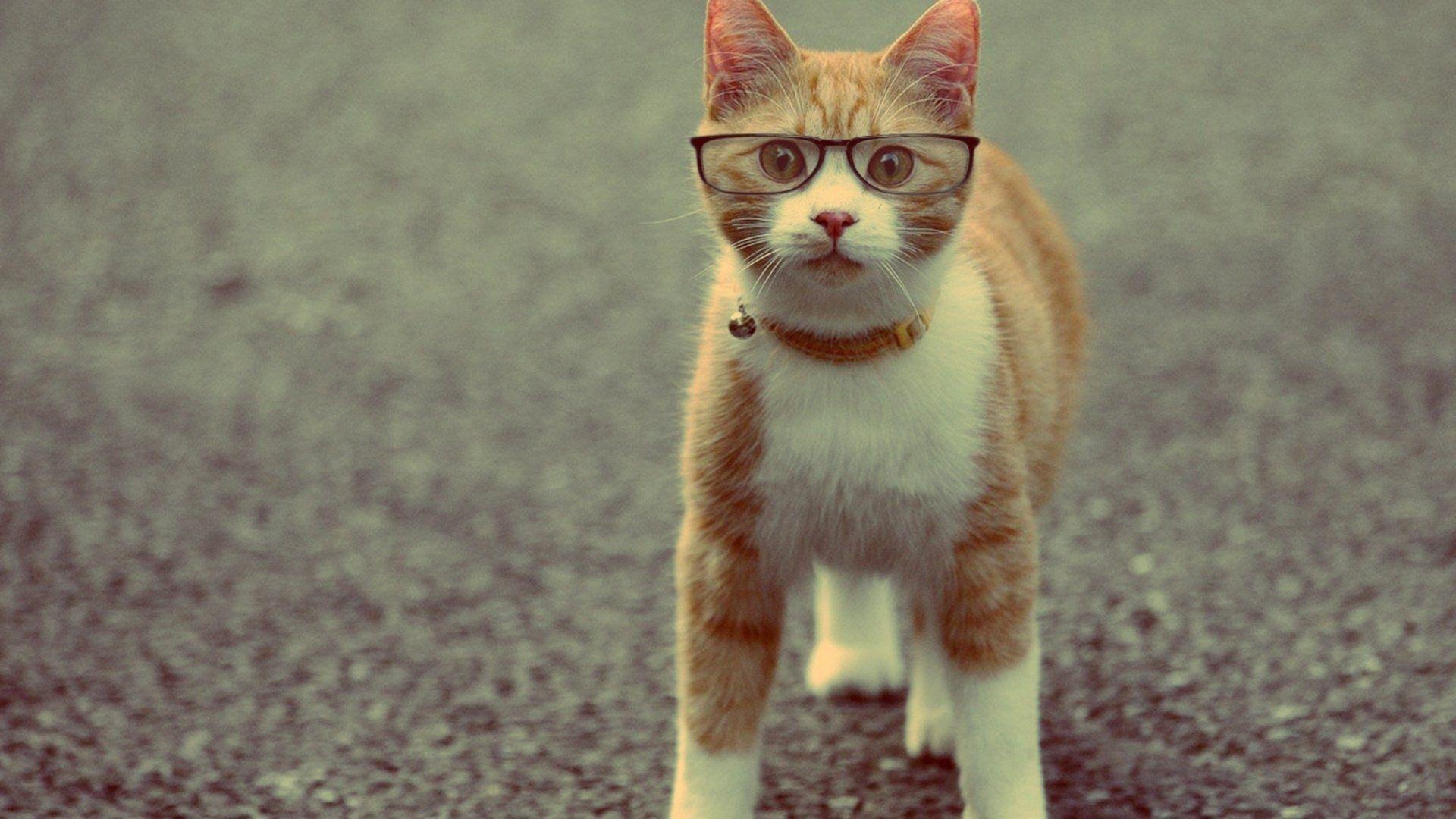 Wallpaper Cat In The Glasses