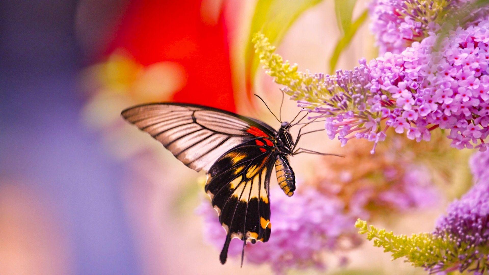 Wallpaper Desktop Butterflies