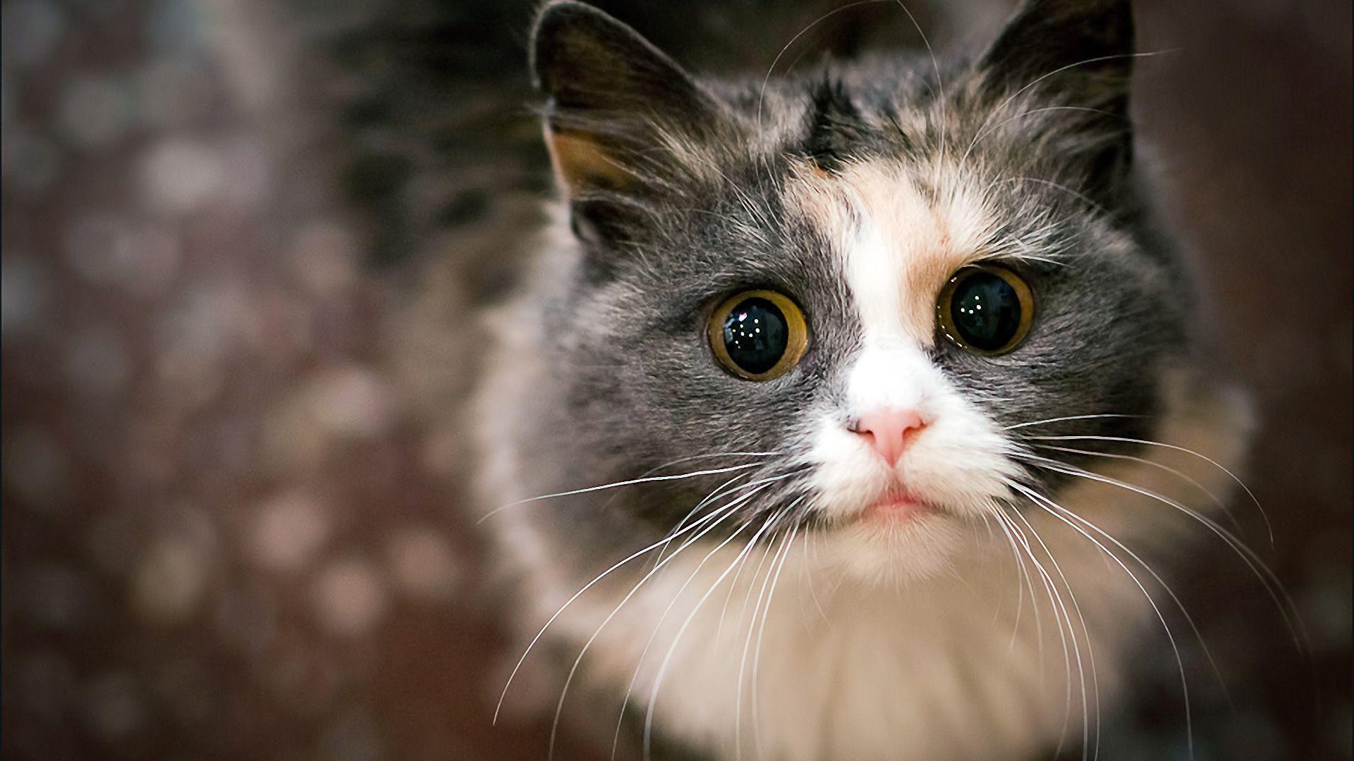 Wallpaper Desktop Cats