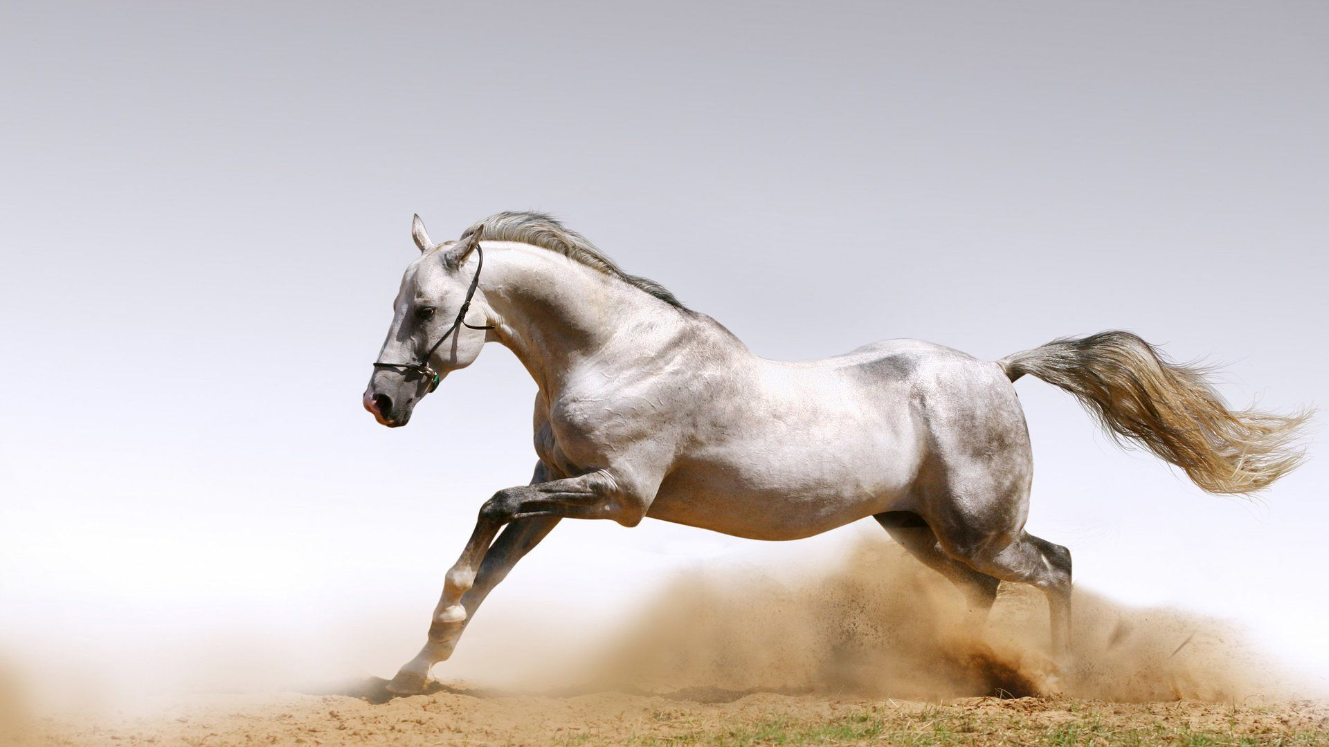 Wallpaper Desktop Horses