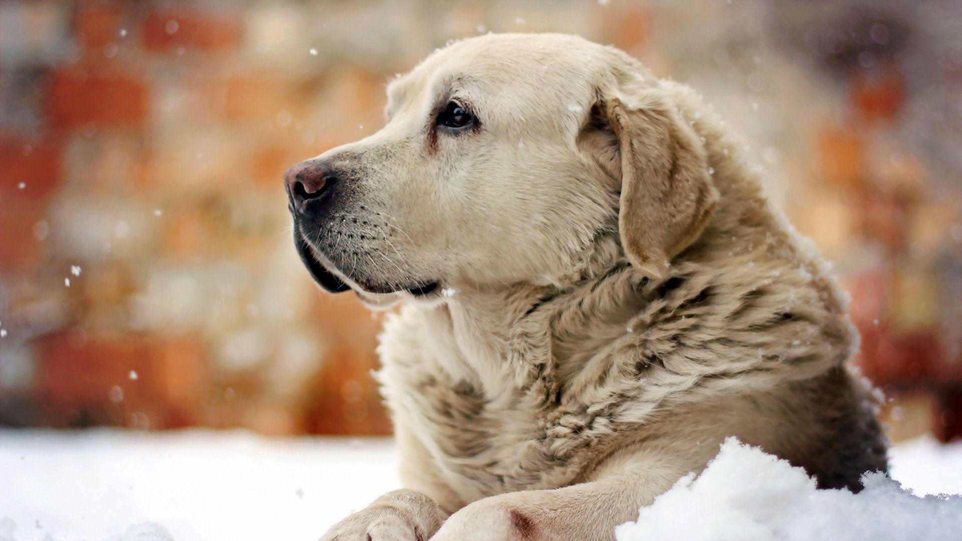 Wallpaper Dog