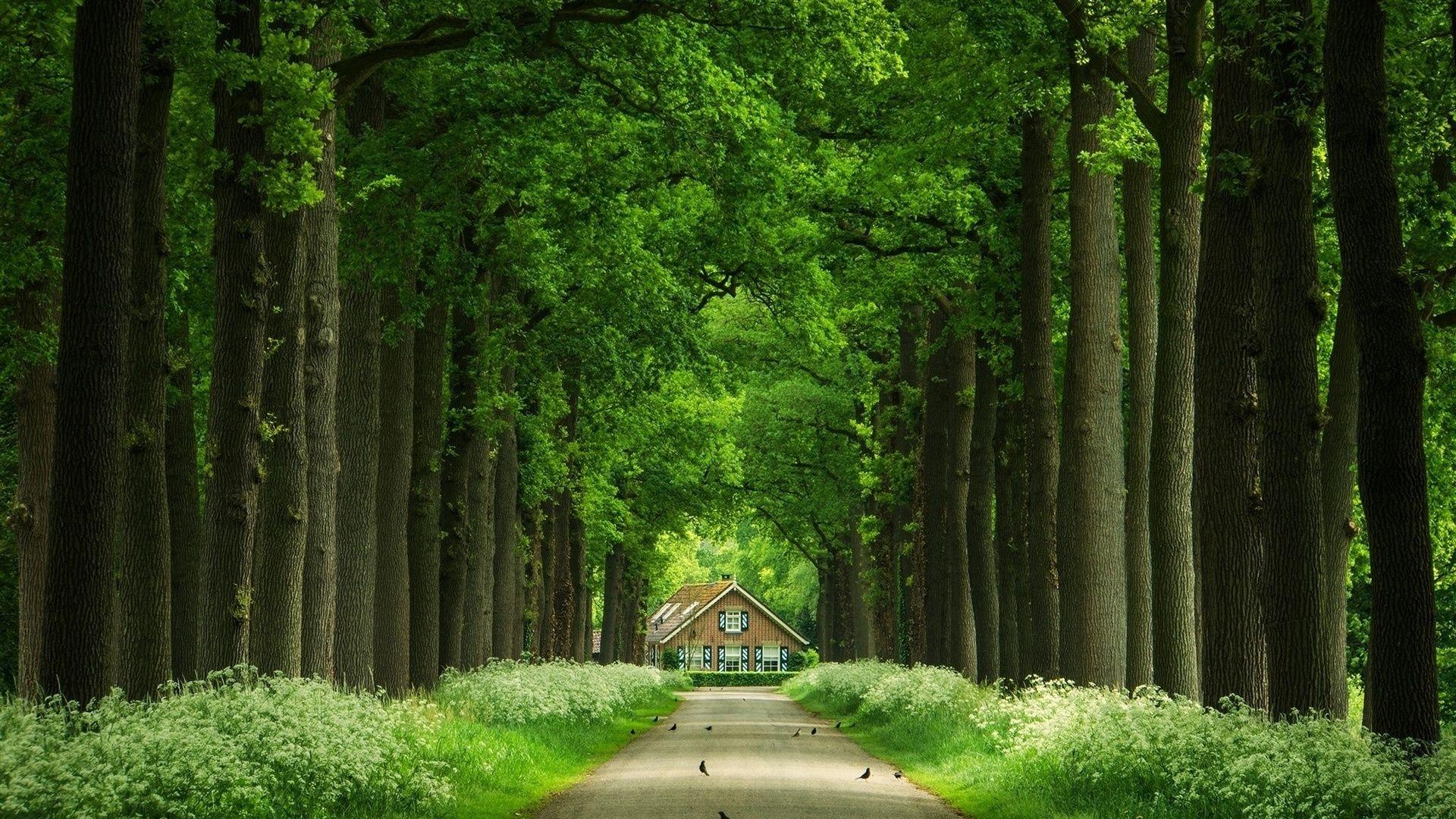 Wallpaper For Desktop Desktop Beautiful Avenue In The Forest