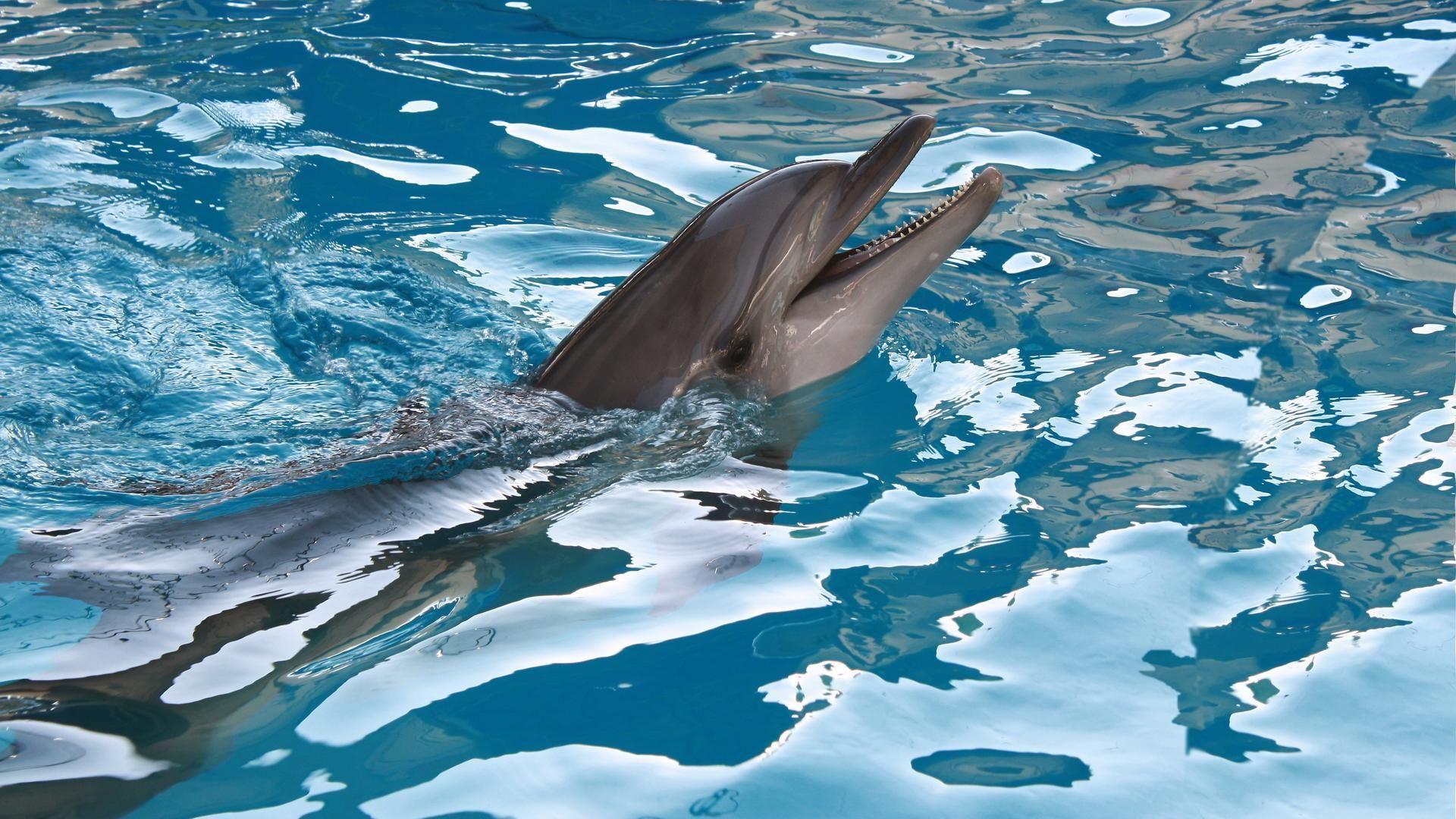 Wallpaper For Desktop Dolphins