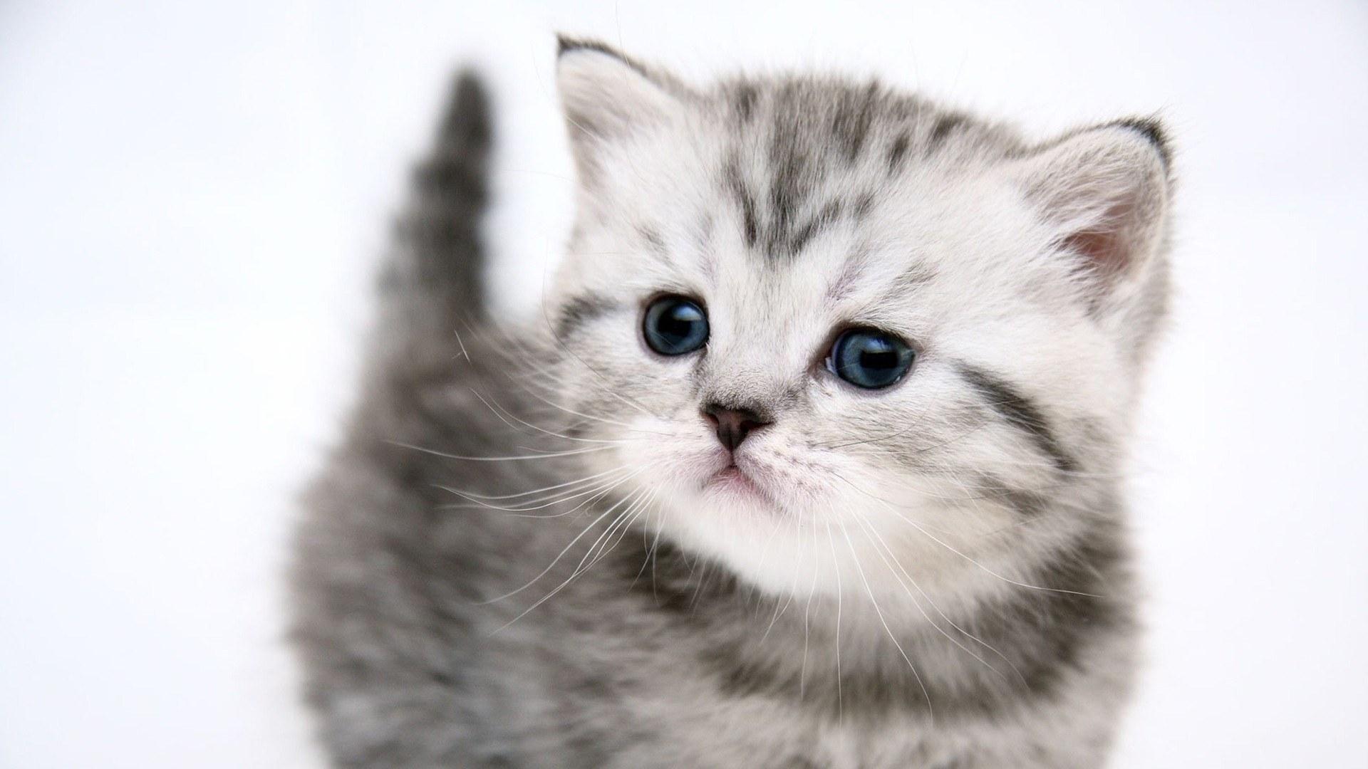 Wallpaper For Desktop Kittens 1