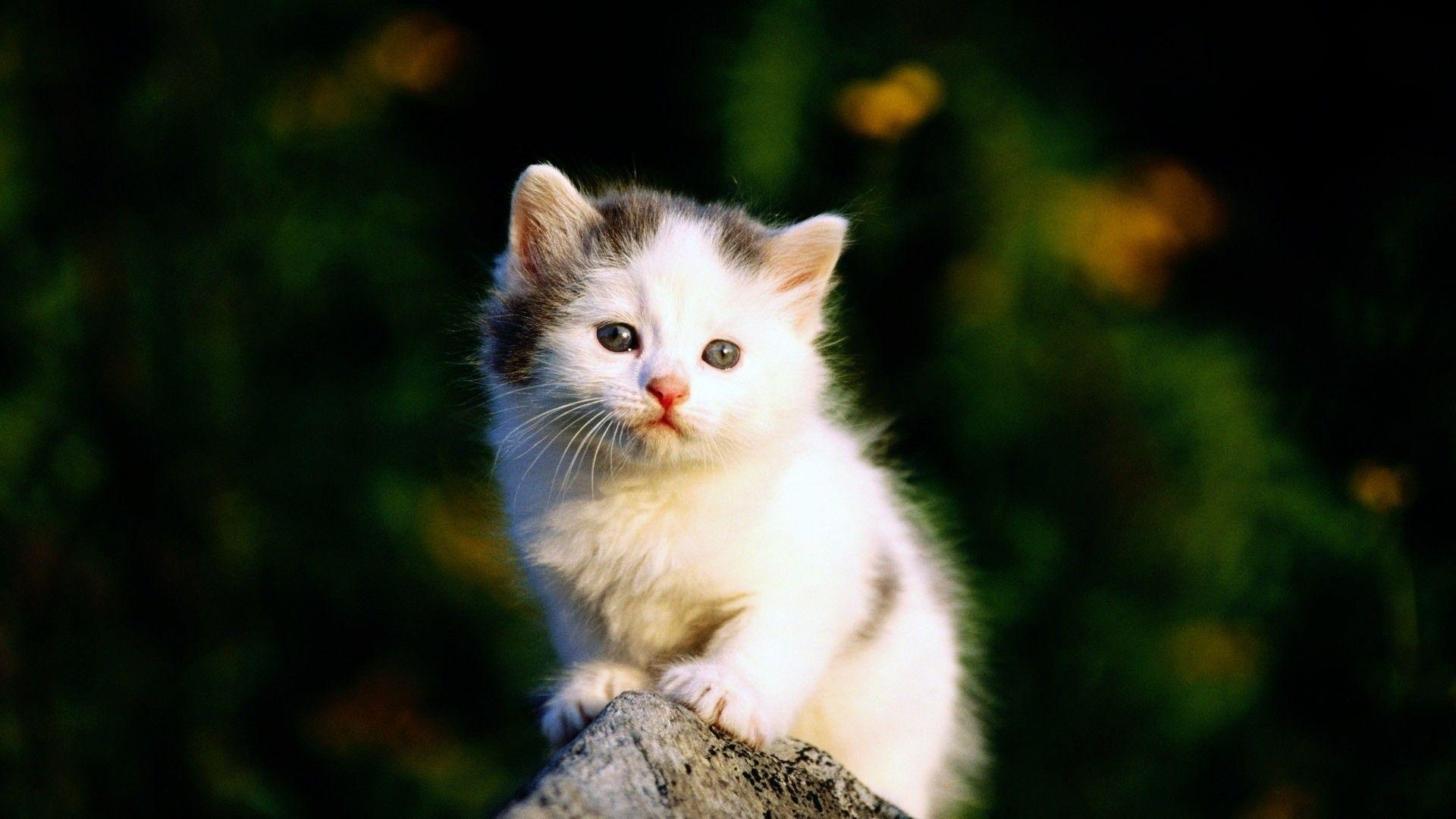 Wallpaper For Desktop Kittens