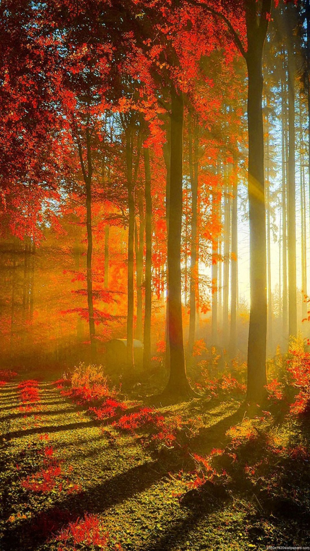 Wallpaper For Iphone Autumn Nature