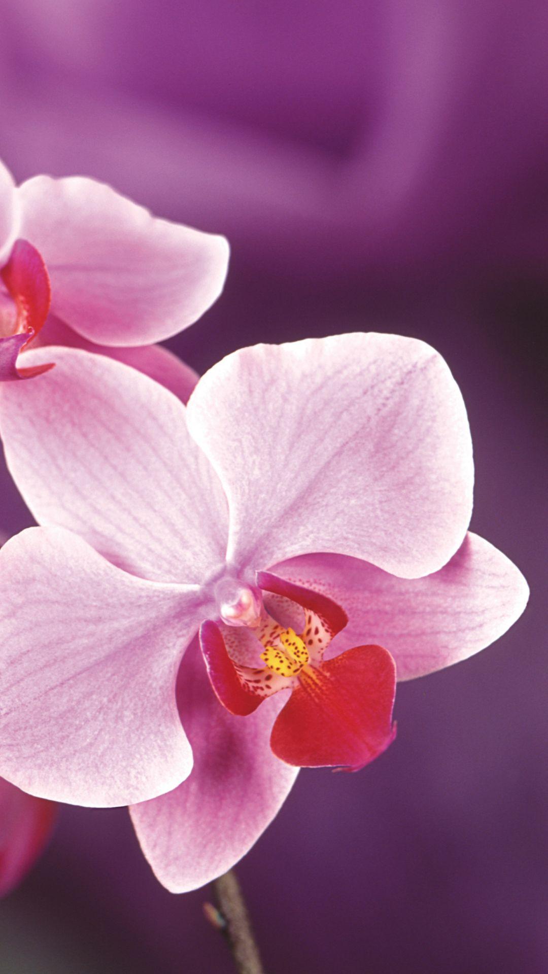 Wallpaper Full Orchids