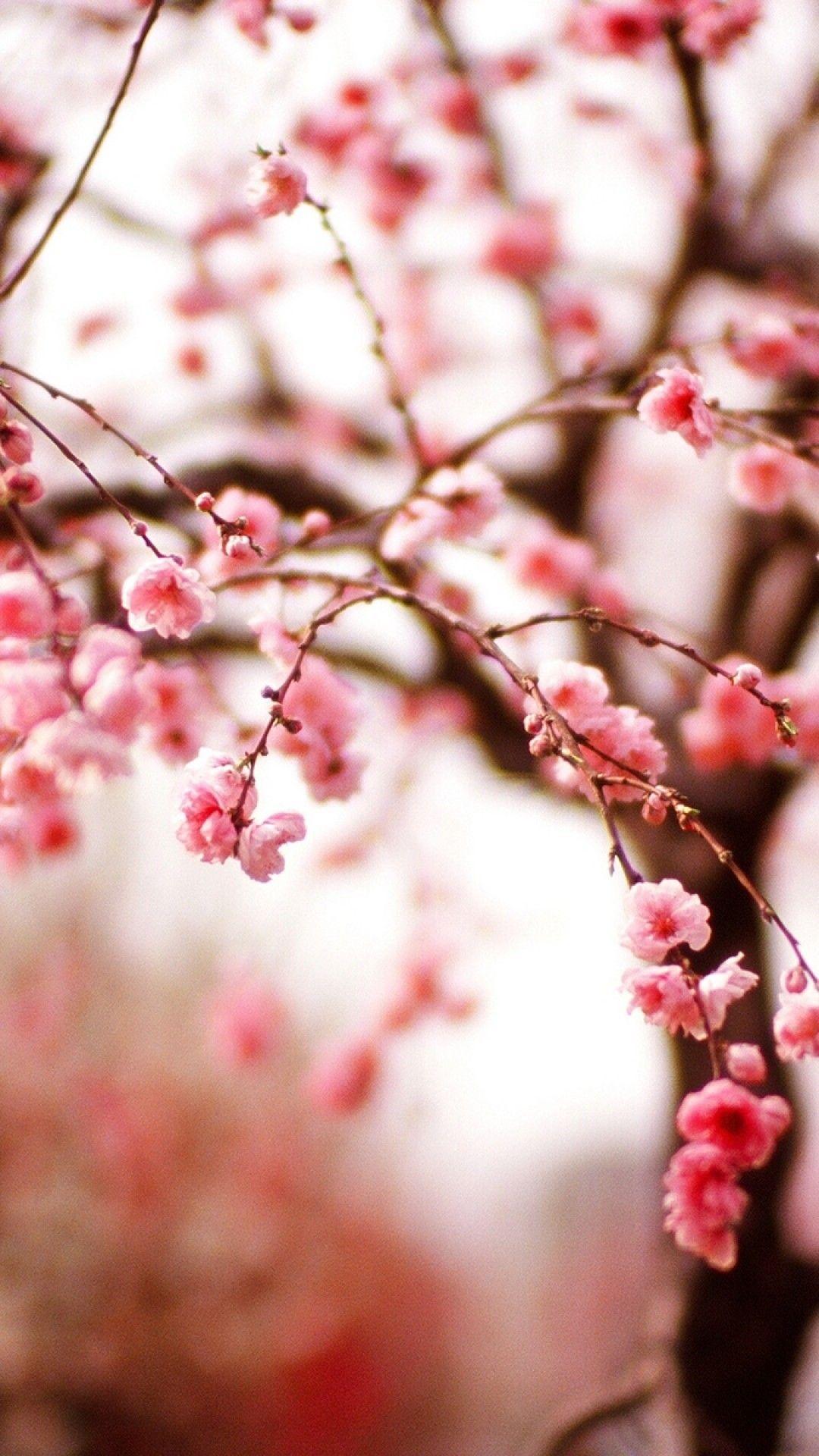 Wallpaper Iphone Sakura Hd