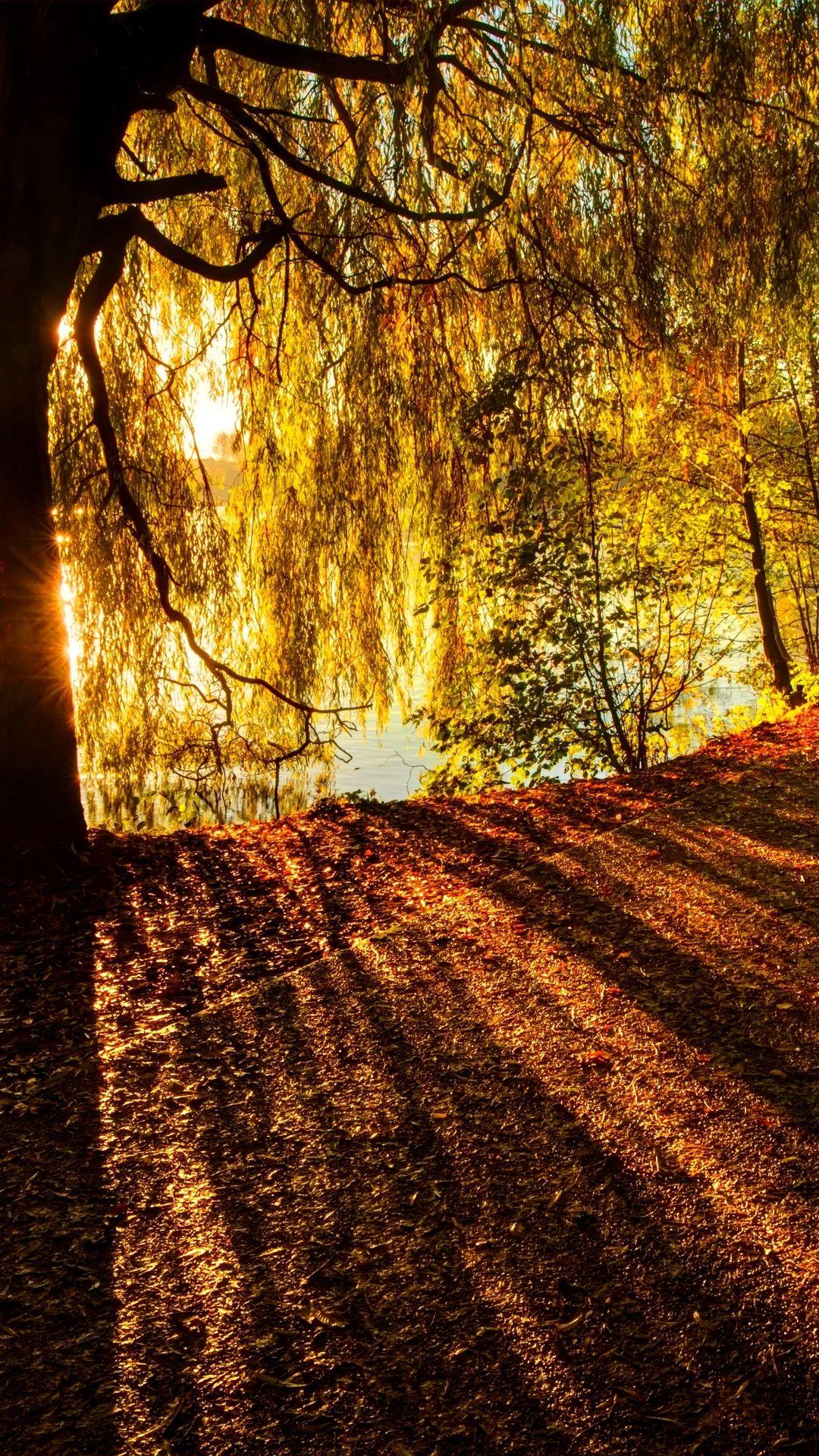 Wallpaper Nature Autumn
