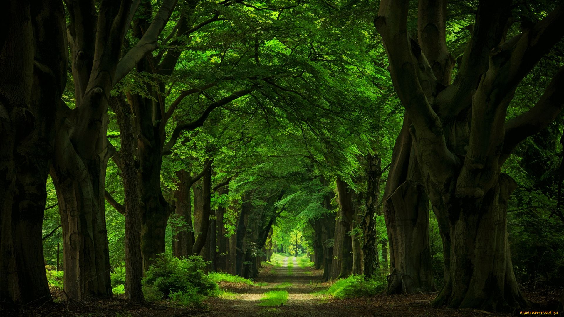 Wallpaper Nature Forest Avenue
