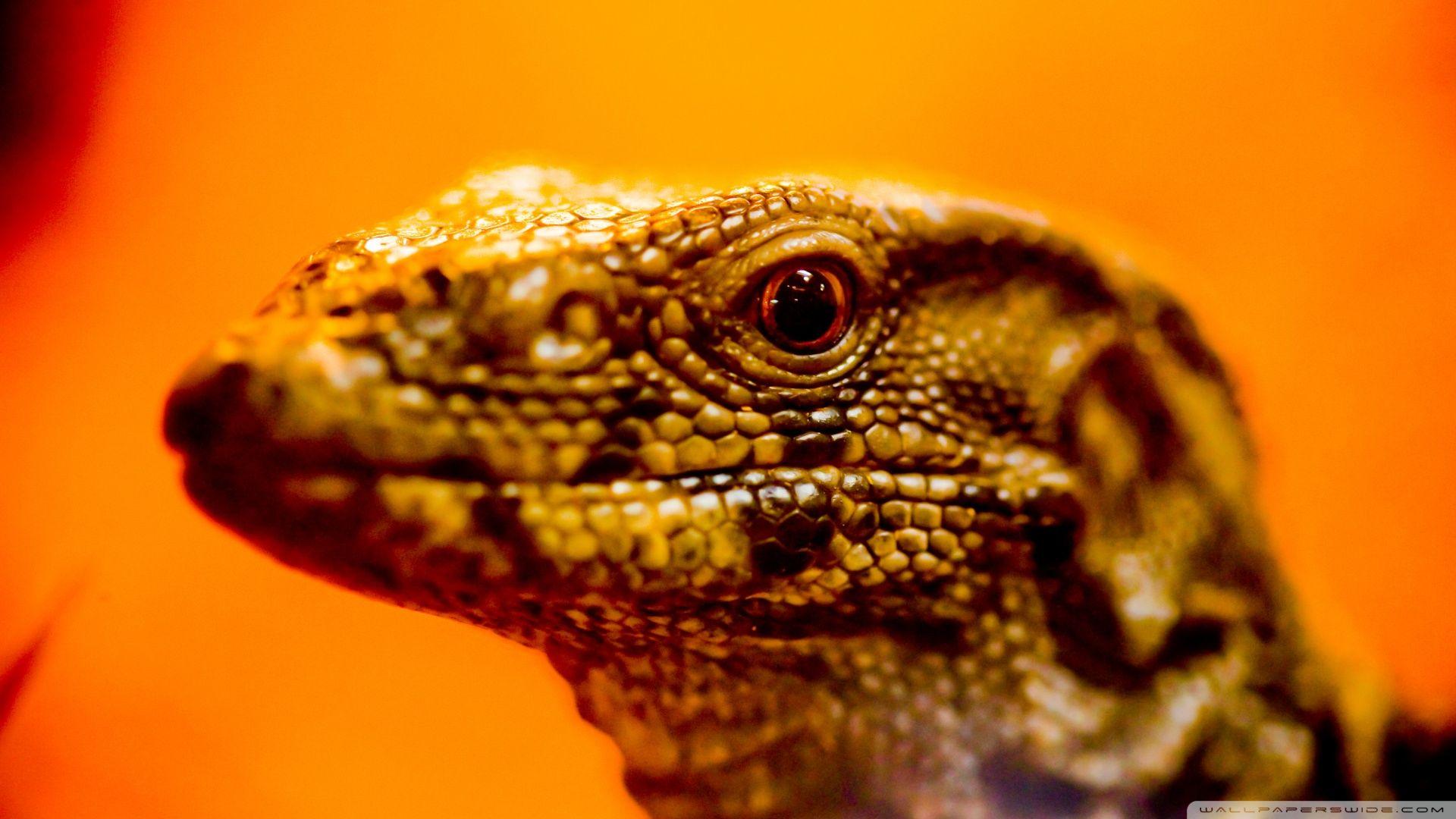 Wallpaper Reptiles
