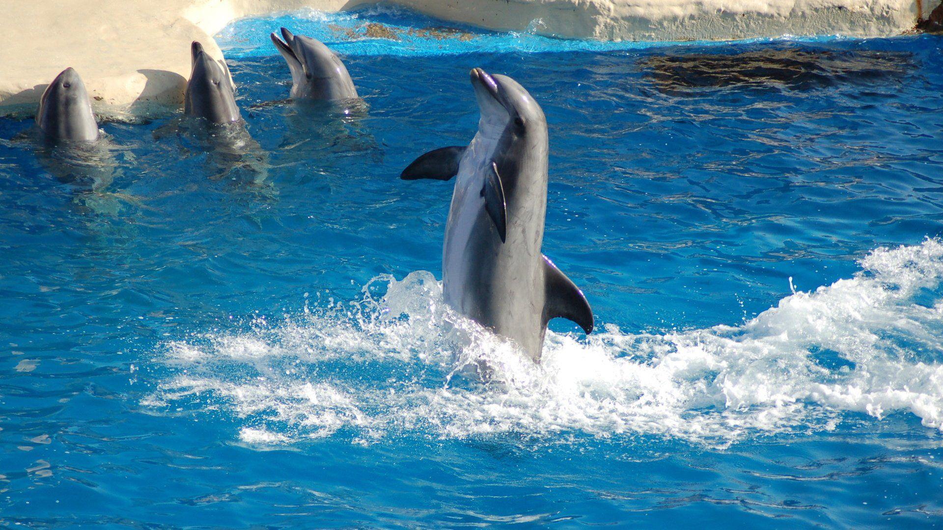 Wallpaper Sea Dolphins