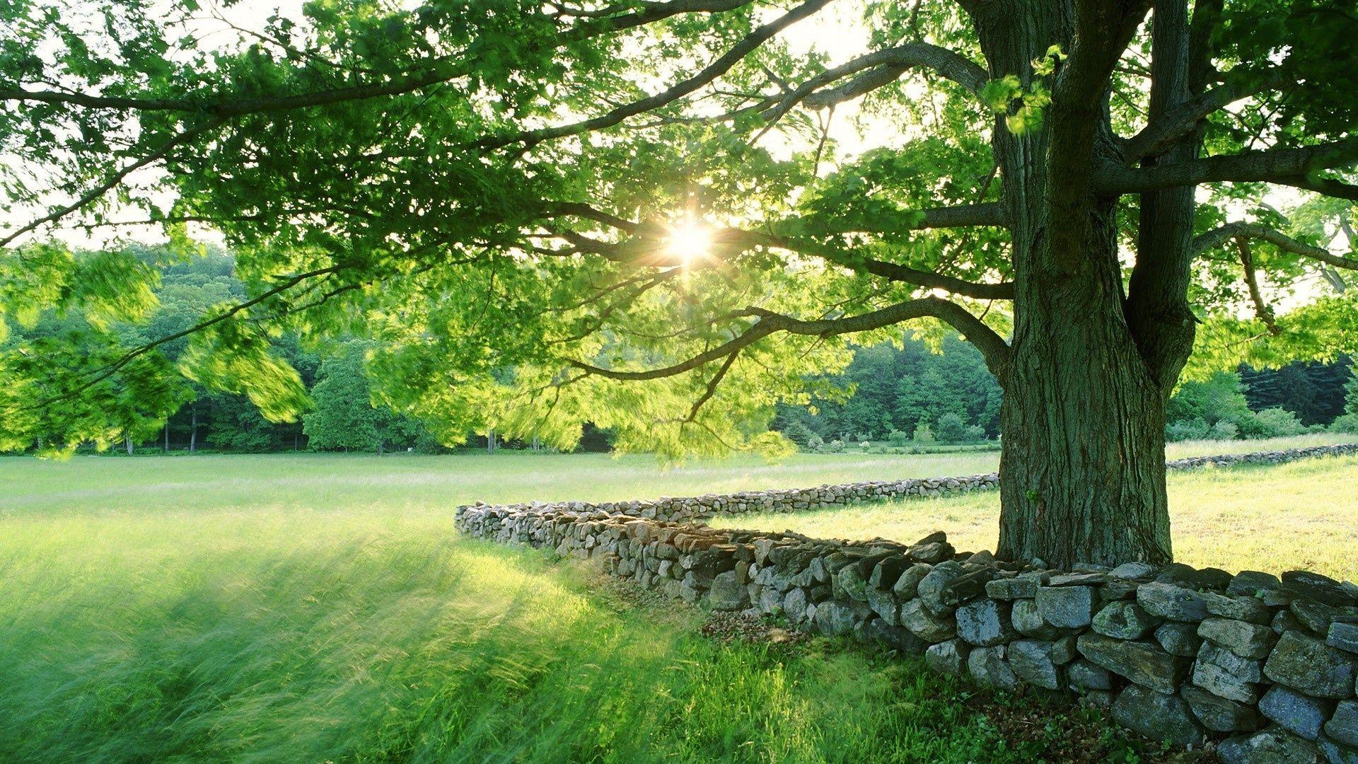 Wallpaper Summer Nature