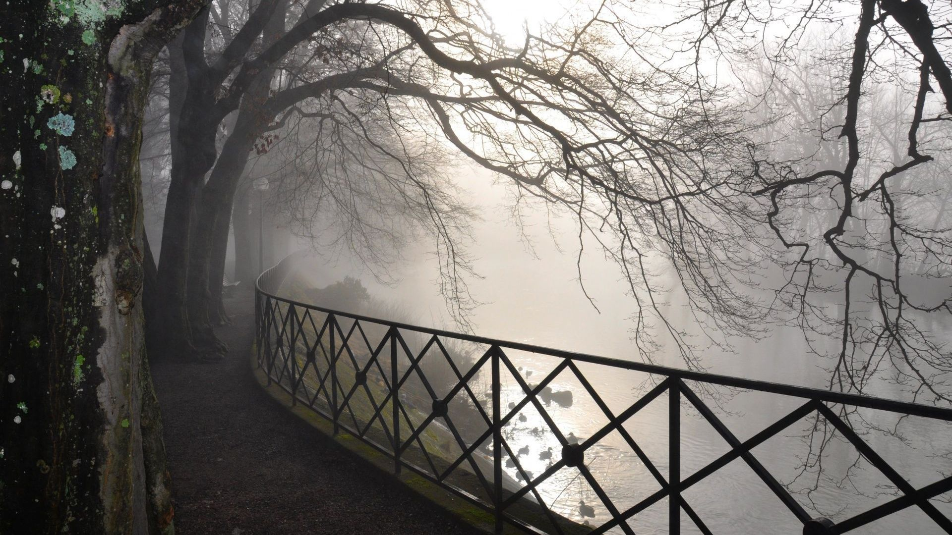 Wallpaper Trees In The Fog