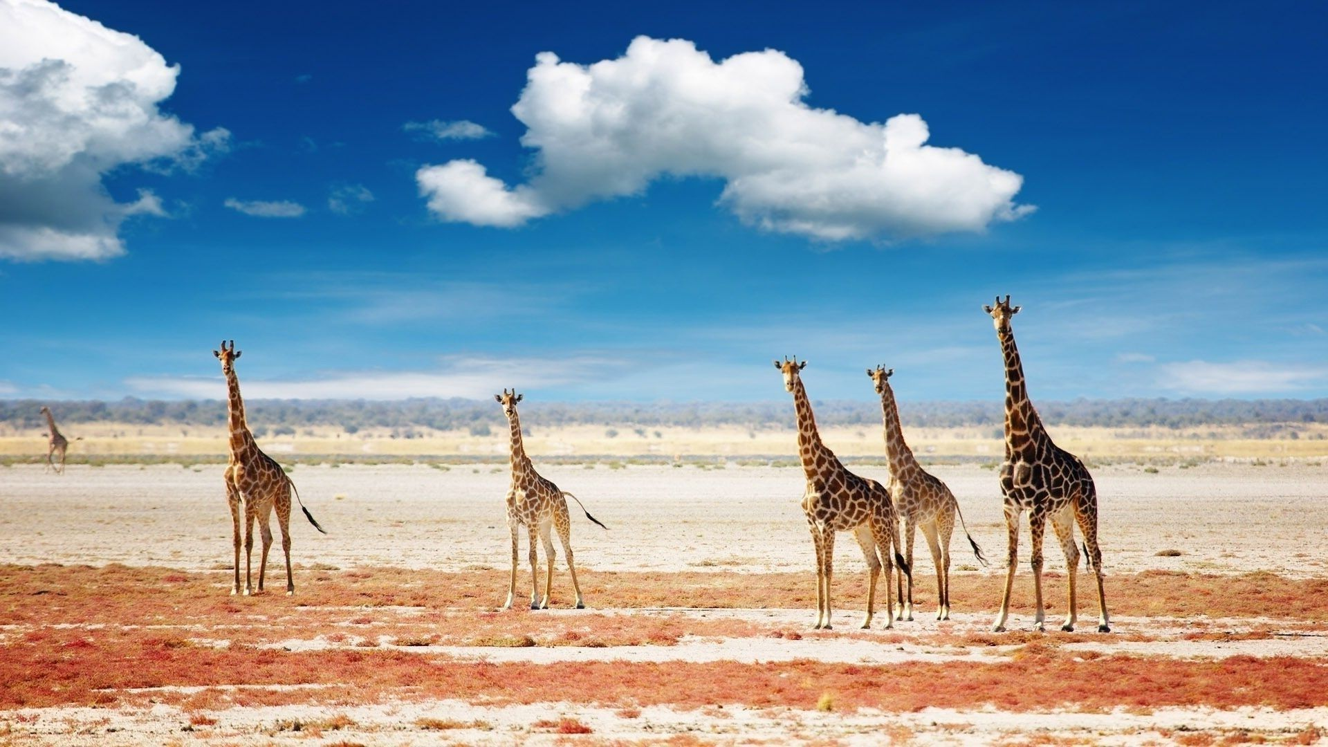 Wallpapers Africa With A Giraffe